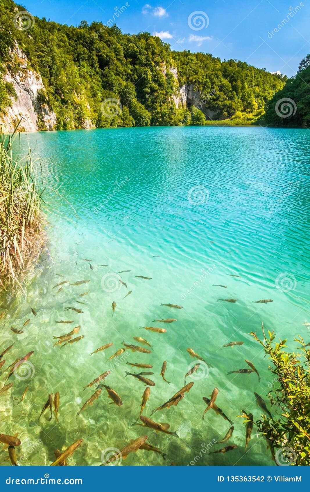 Turkos sjö med fiskar, Plitvice sjönationalparken