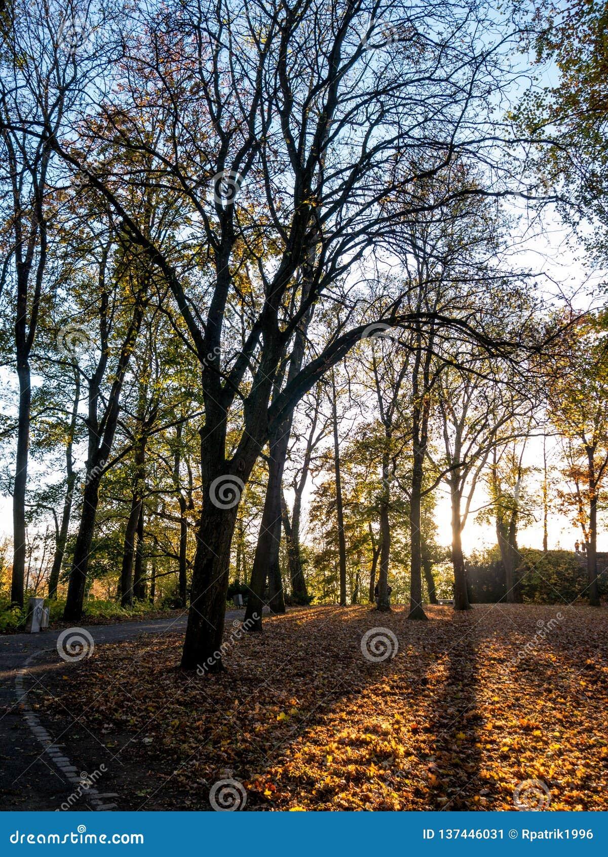 Turmberg en otoño