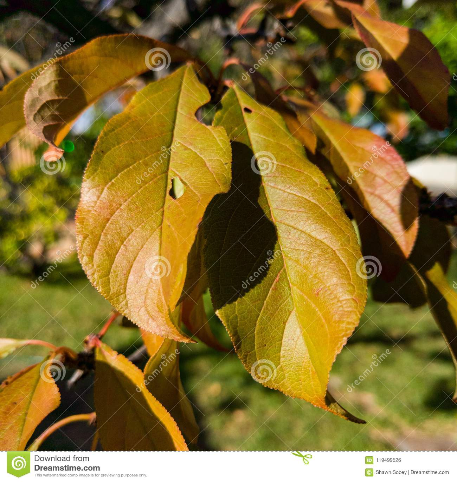 Turning Leaves Stock Photo Image Of Leaves Turn Autumn 119499526