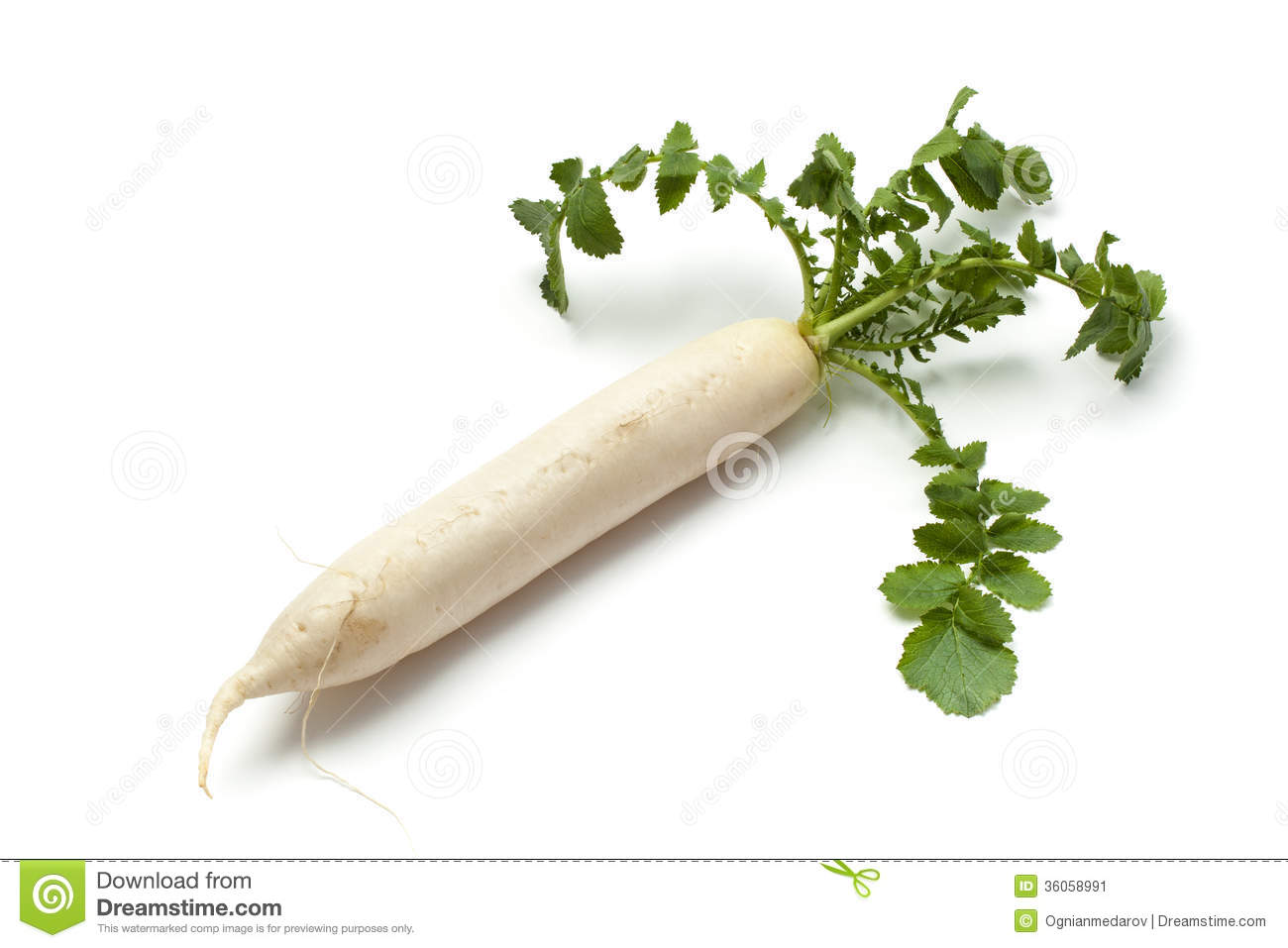 Fresh turnip with green leafs isolated on white.