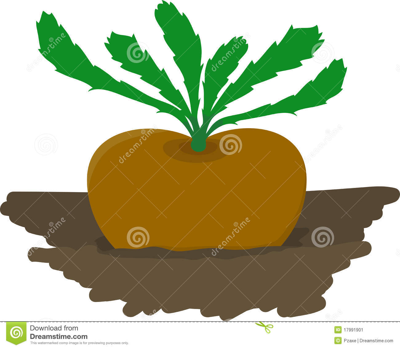 Turnip Growing In Garden - Vector Illustration Stock Vector ...
