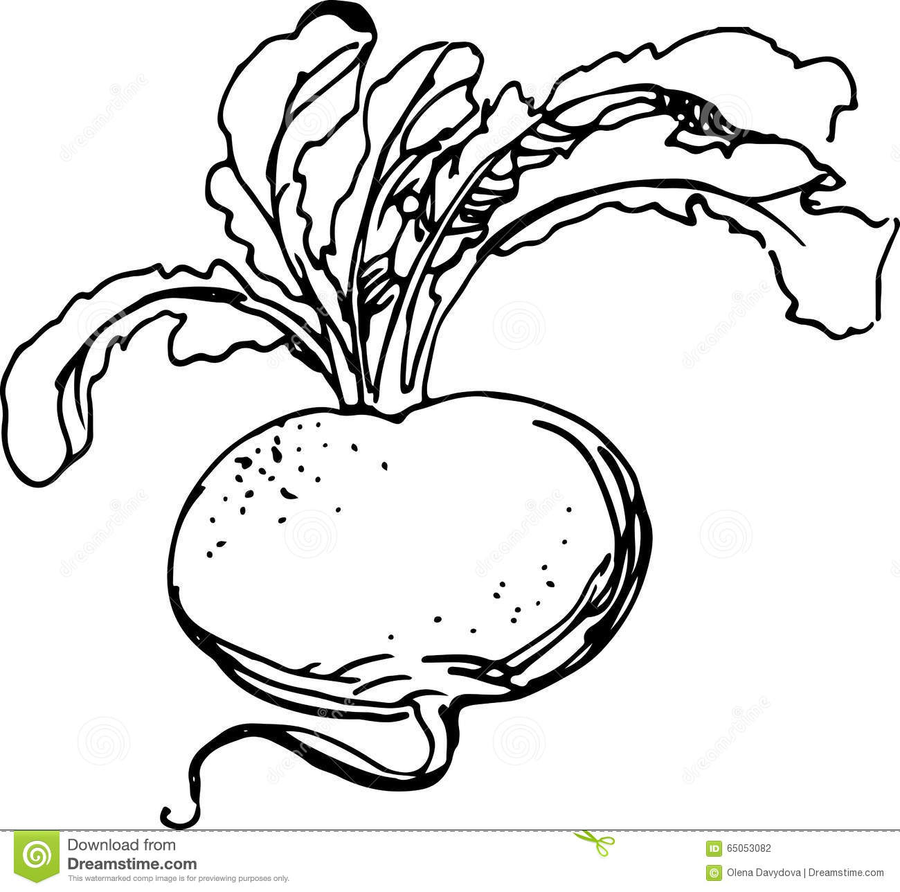 Vector turnip cartoon vector 70819039 for Turnip coloring page