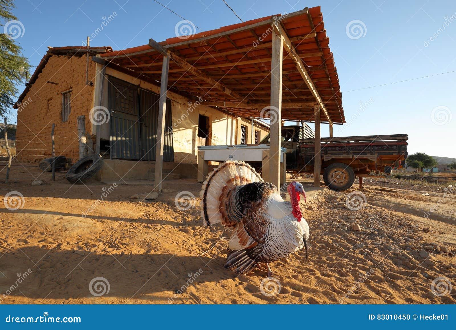 Turquía en el cortejo