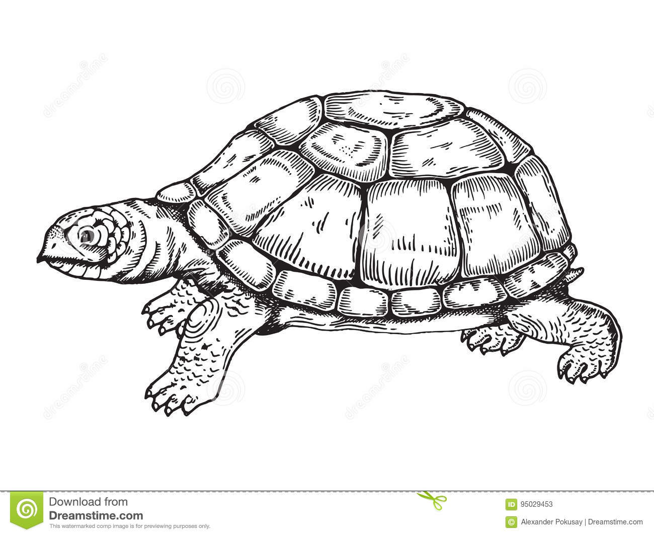 Line Drawing Turtle : Turtle engraving style vector stock illustration