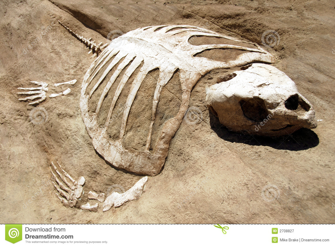 Turtle Fossil Royalty Free Stock Photography Image 2708827