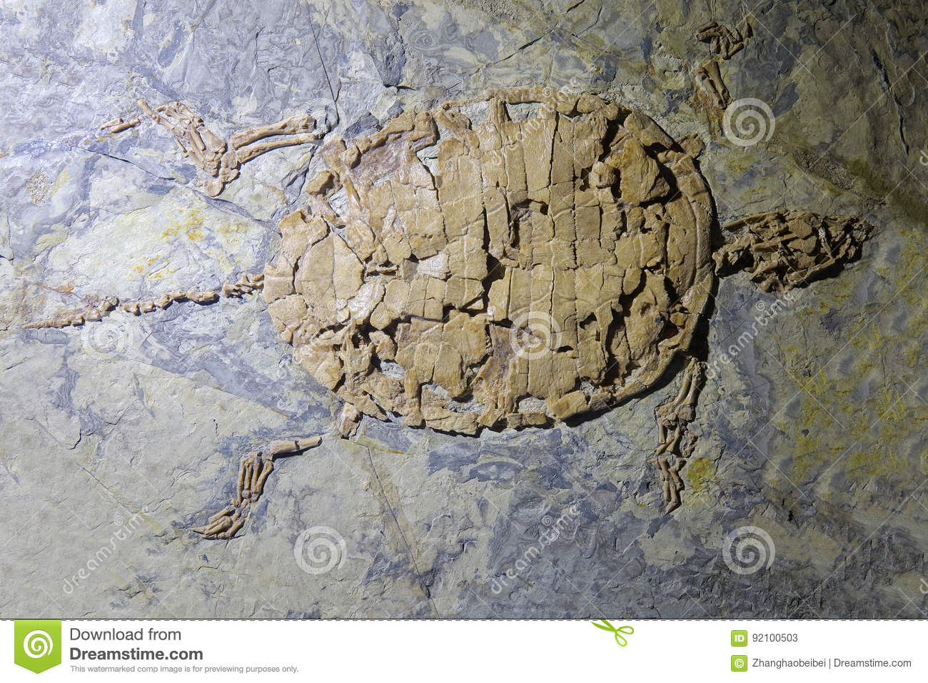 Download Turtle fossil stock image. Image of rock, antiquity, turtle - 92100503