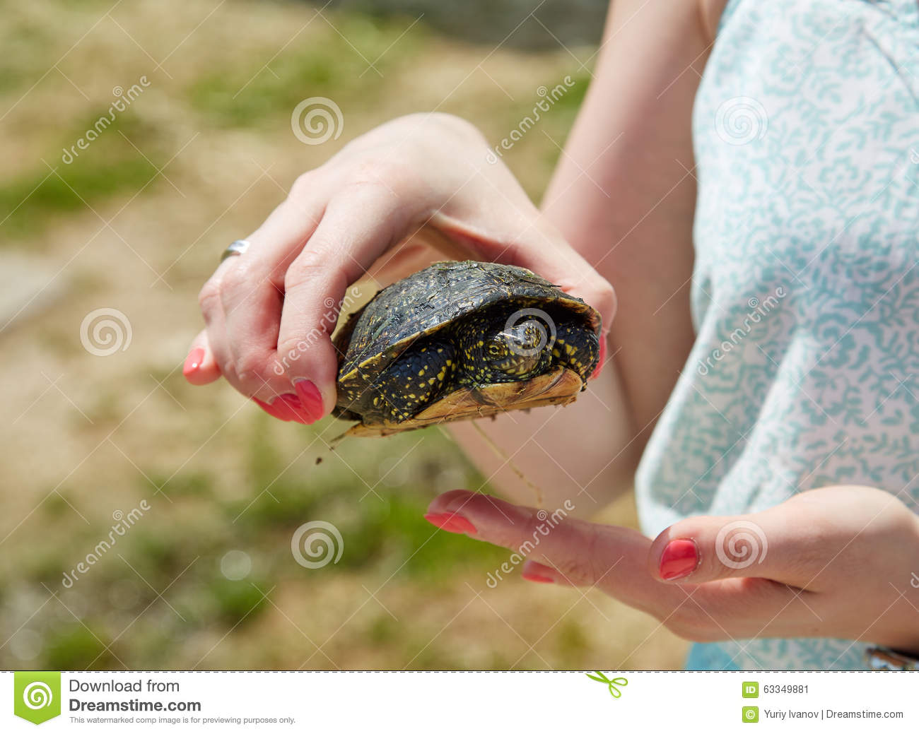 Little Girl Holding In Hands A Small Turtle Royalty Free