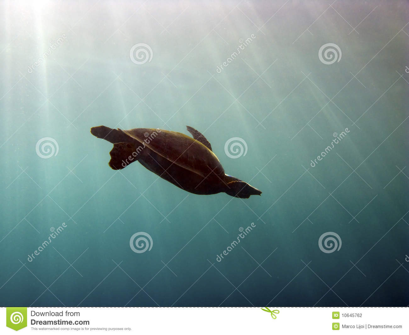 Turtle silhouette with sunbeams