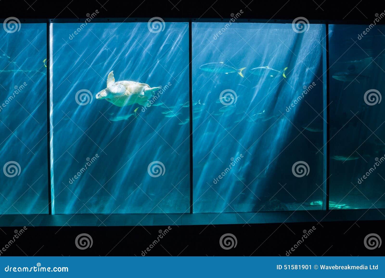 Fish in tank swimming - Turtle Swimming In Fish Tank