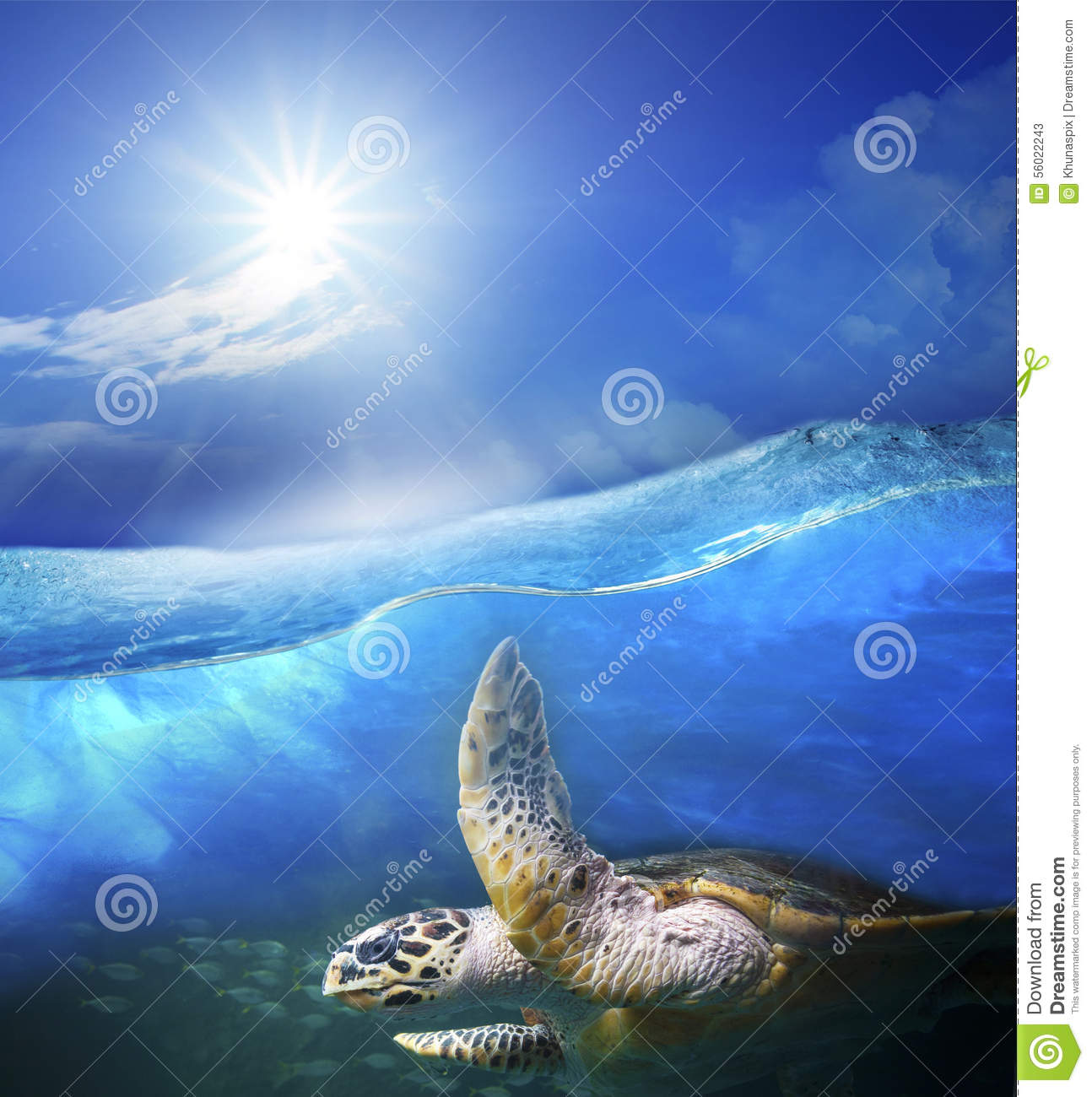 Turtle swimming under clear sea blue water with sun shining on s