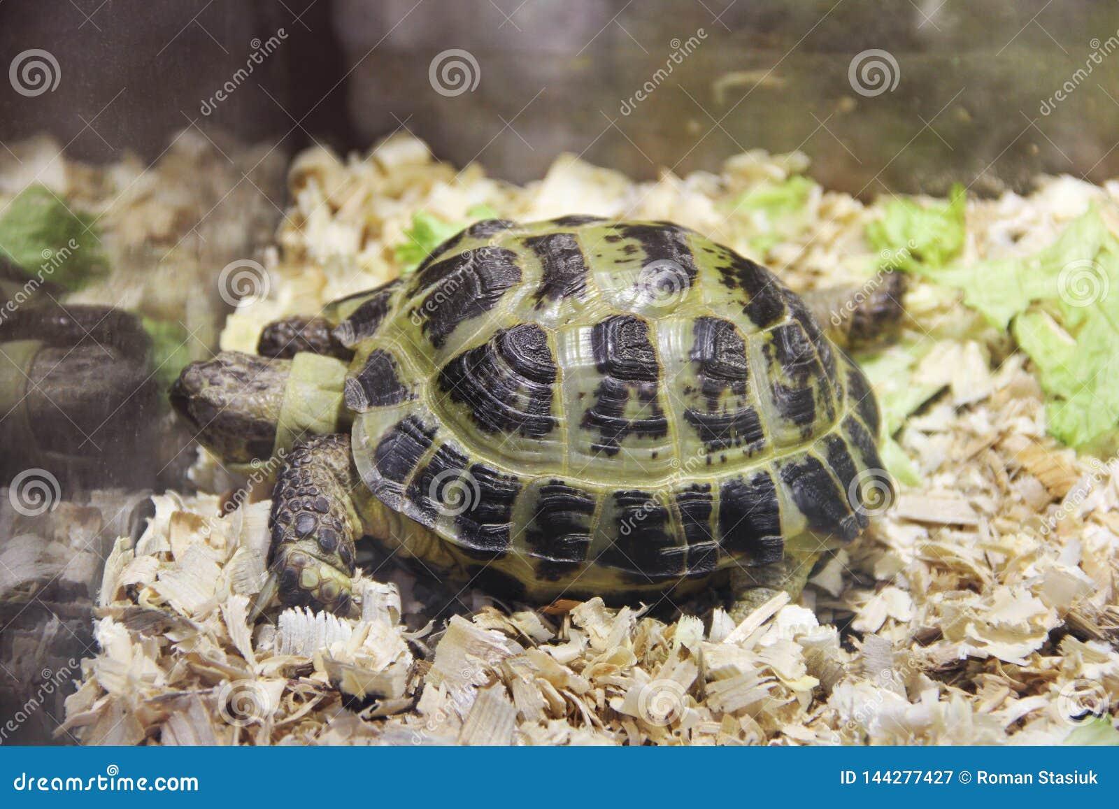 Turtle in a terrarium
