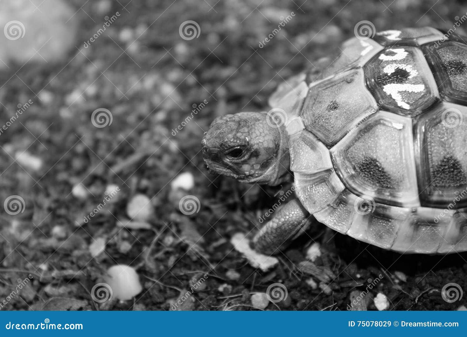 Turtle Terrarium Small Pet Animal Raptiles Tropical Stock Image