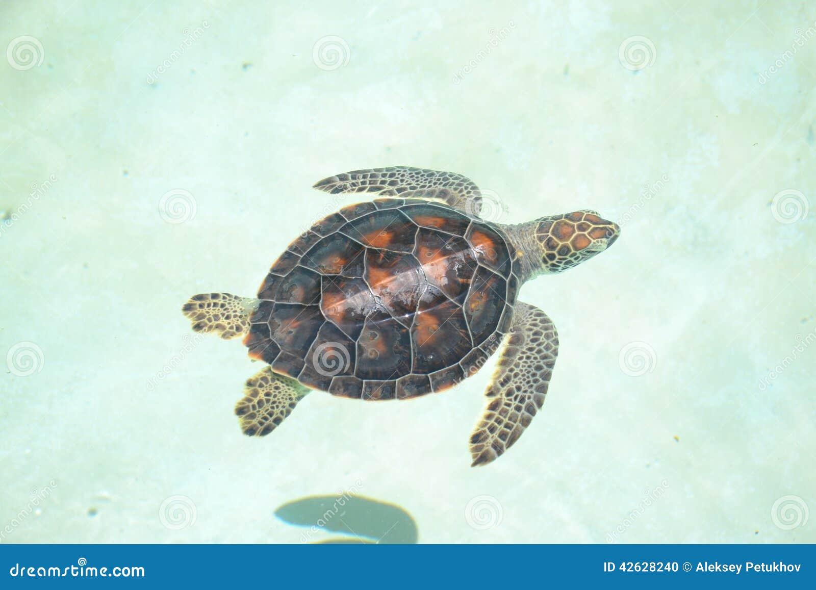 Turtle turtles life reptiles marinelife mammals