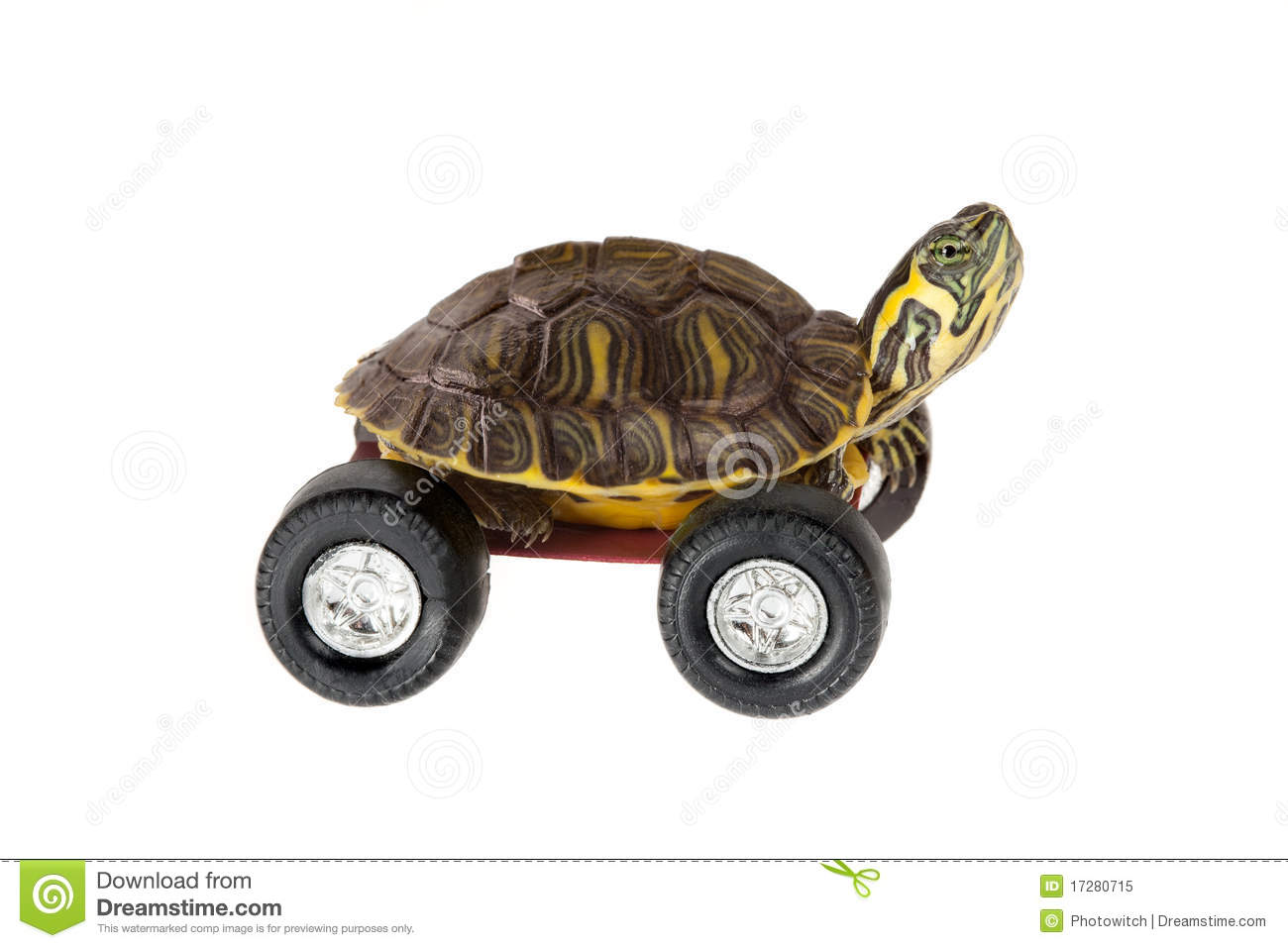 Turtle On Wheels Royalty Free Stock Photo - Image: 17280715