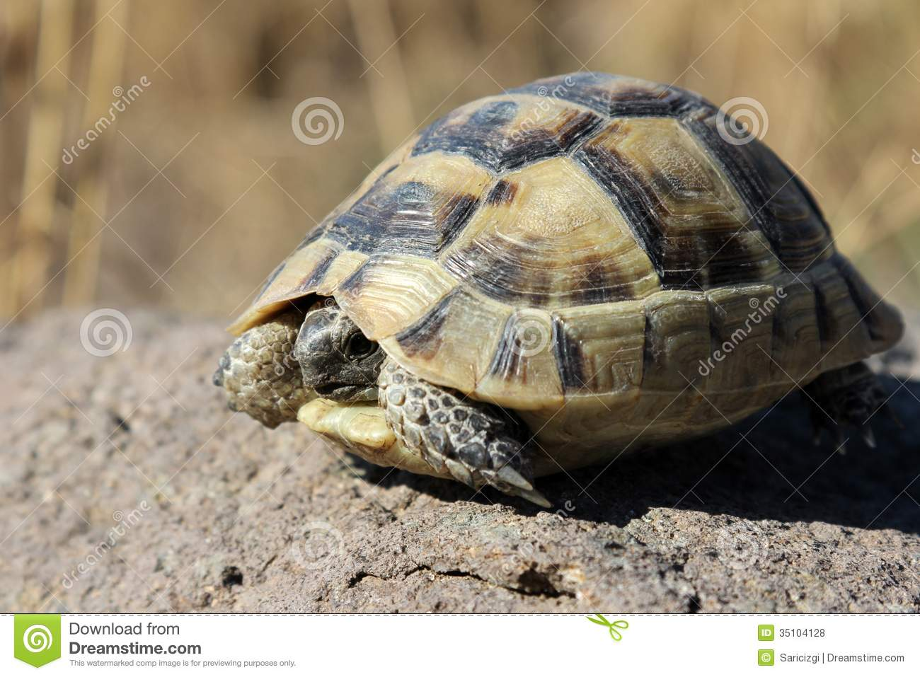 Turtle Royalty Free Stock Photos Image 35104128