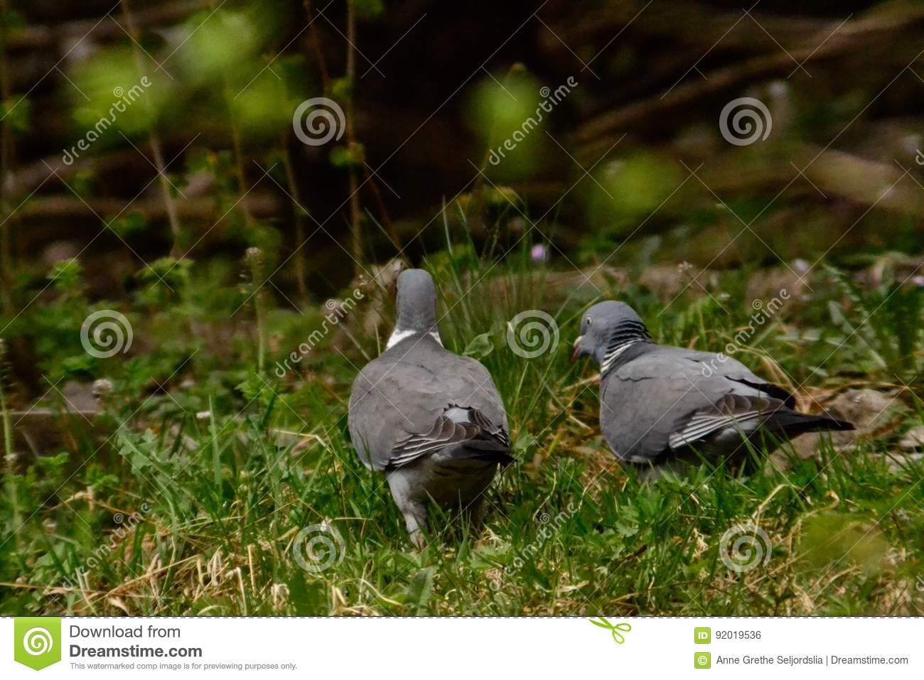 Turtledoves