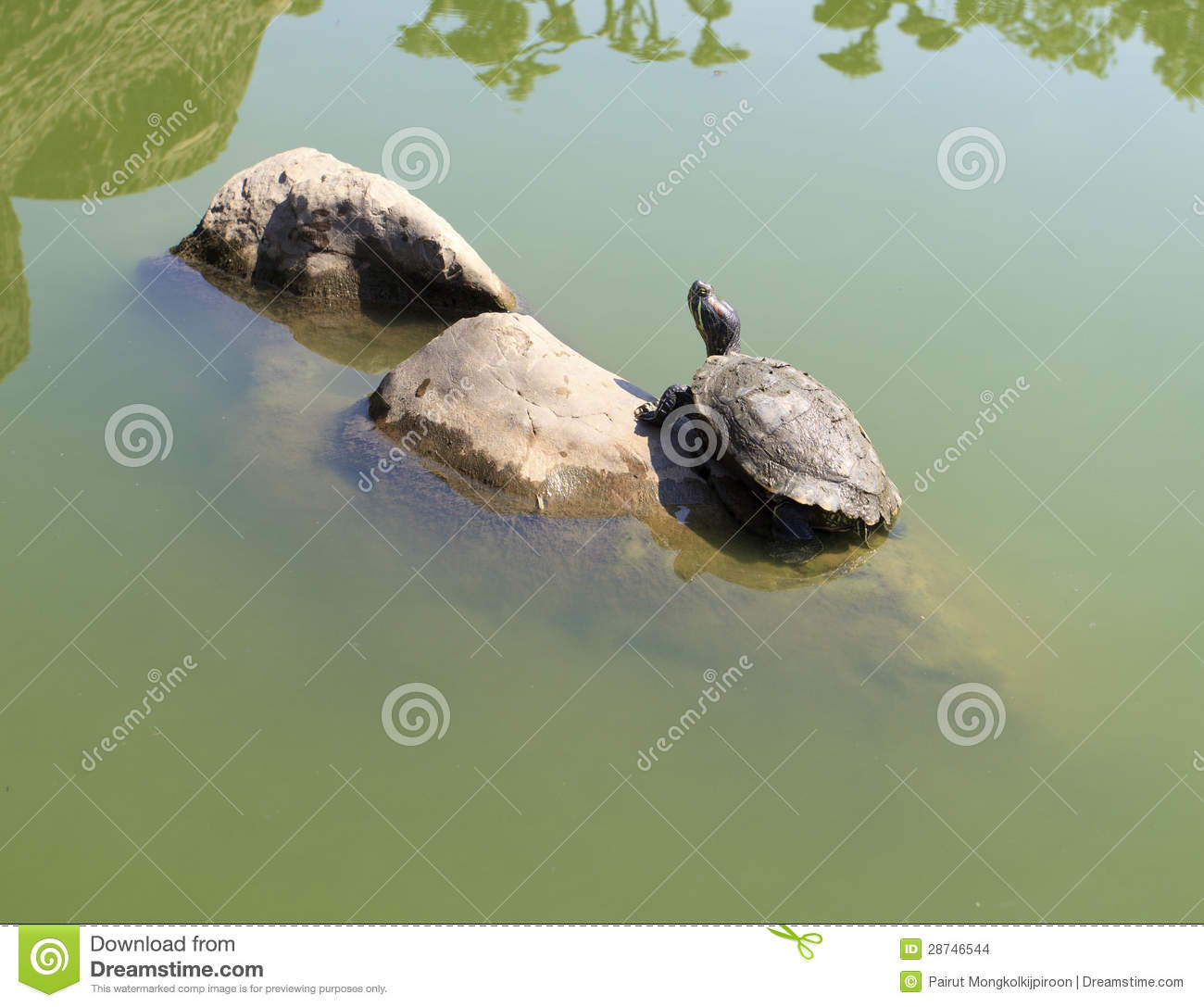 Turtles Basking On The Rocks Stock Images - Image: 28746544