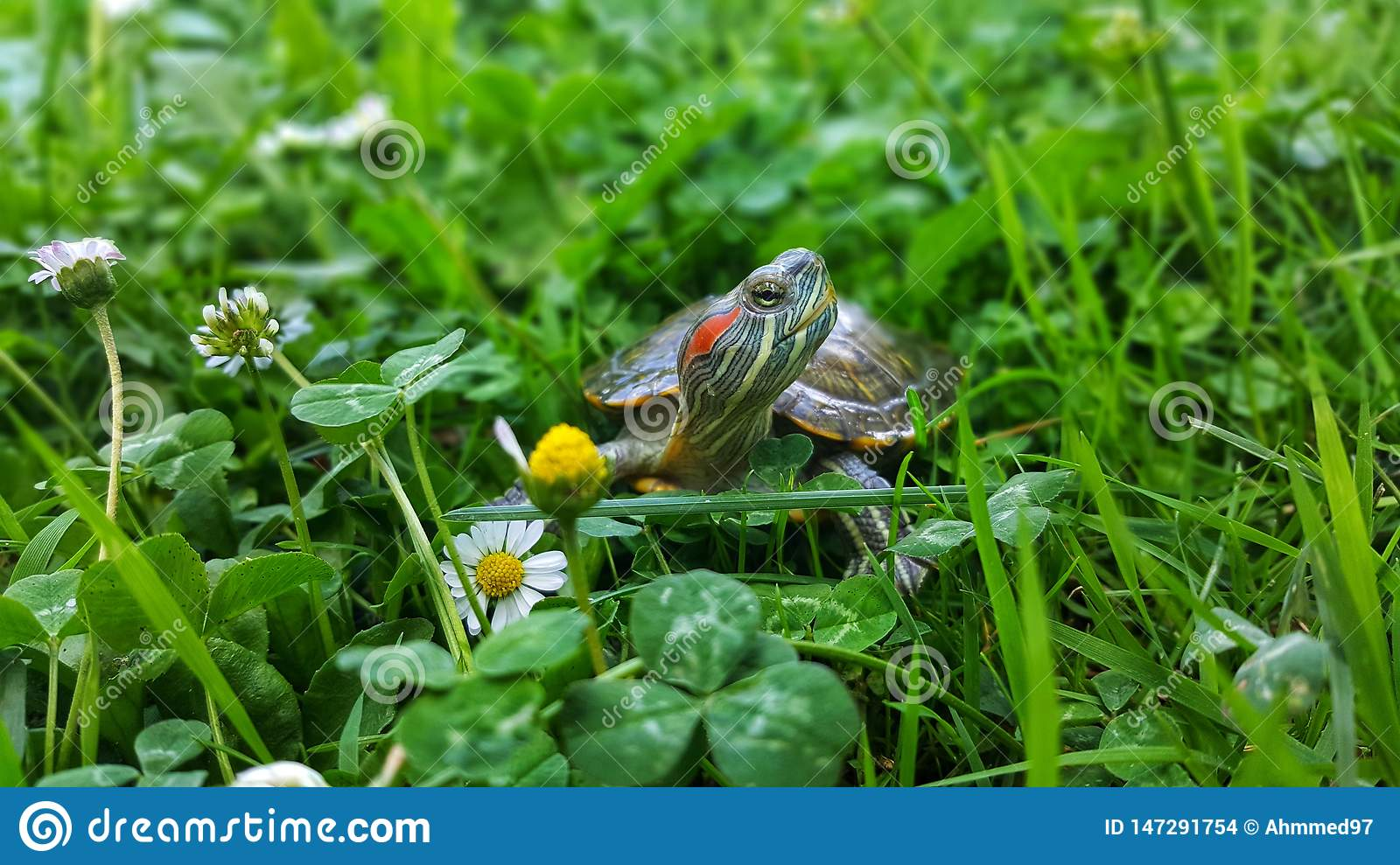 Turtles in the grass