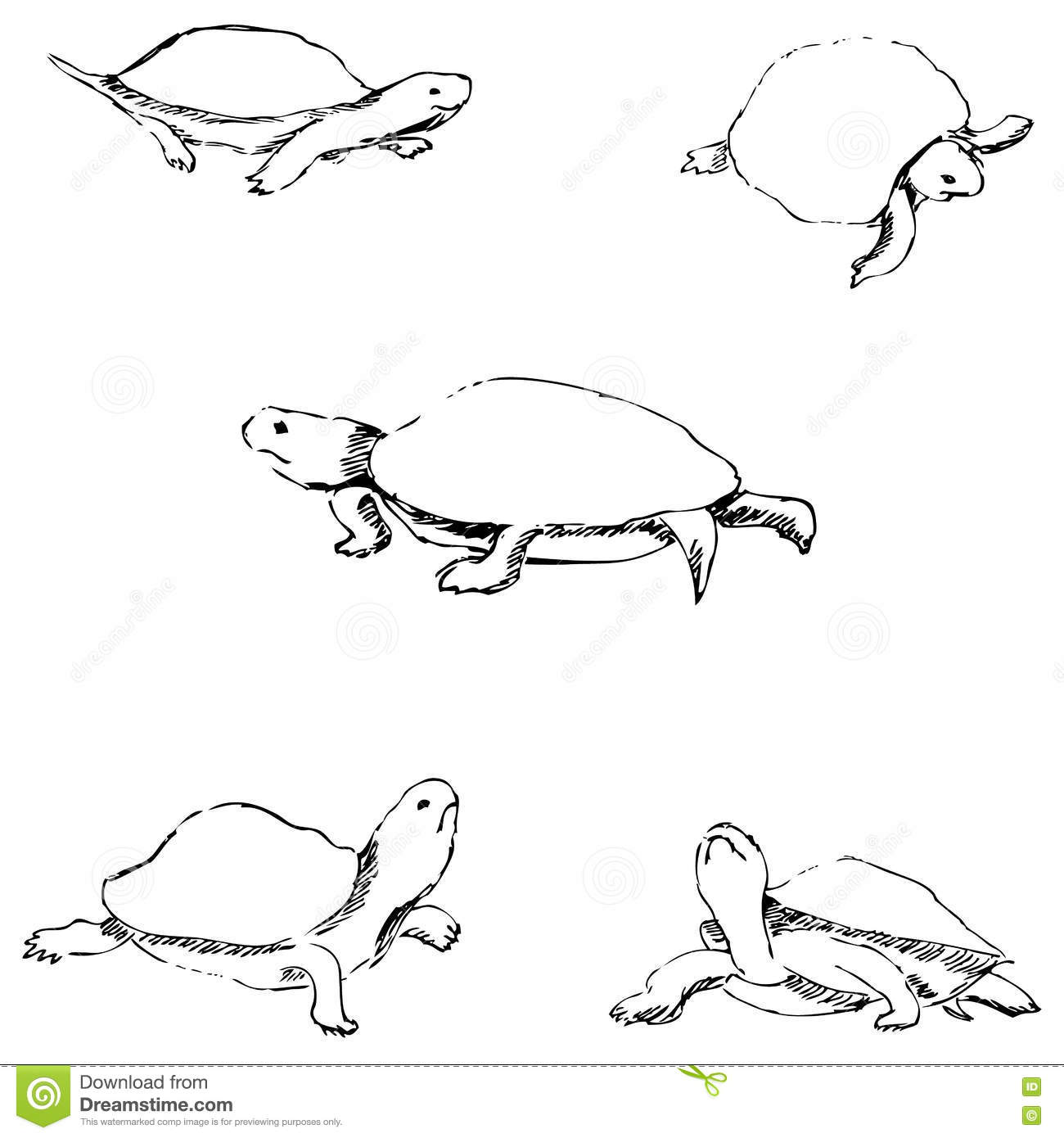 Turtles pencil sketch by hand stock vector illustration of