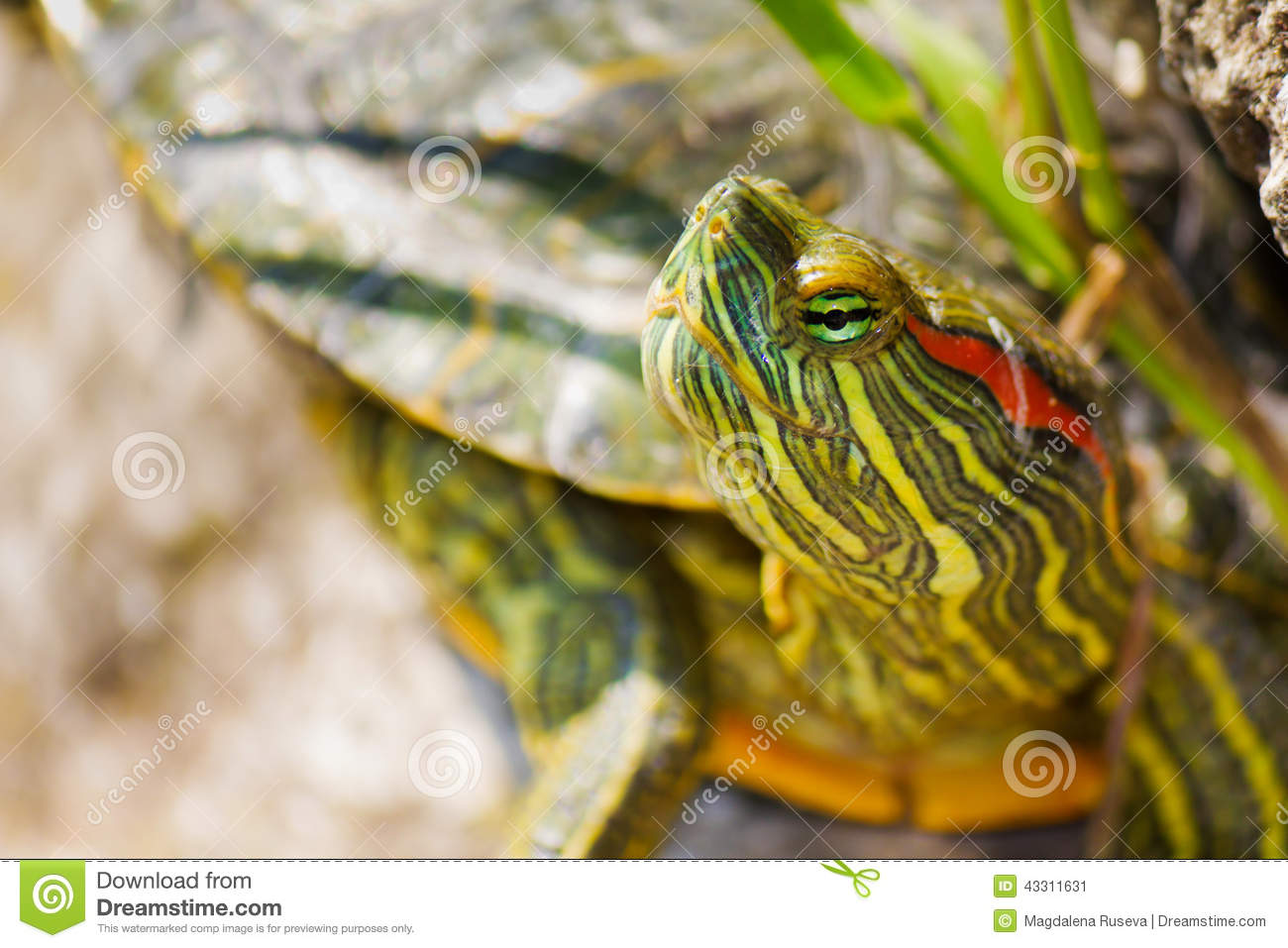 ... turtles are omnivorous, consuming a wide variety of aquatic animals