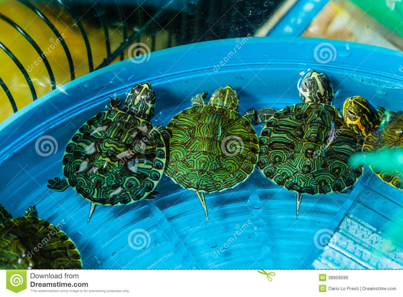 Three small pet turtles in a bowl full of water triyng to escape.