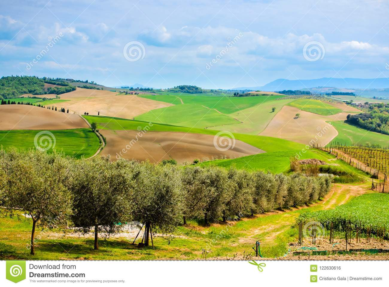 Tuscan Agrucultural Landscape Italy, Olive Trees