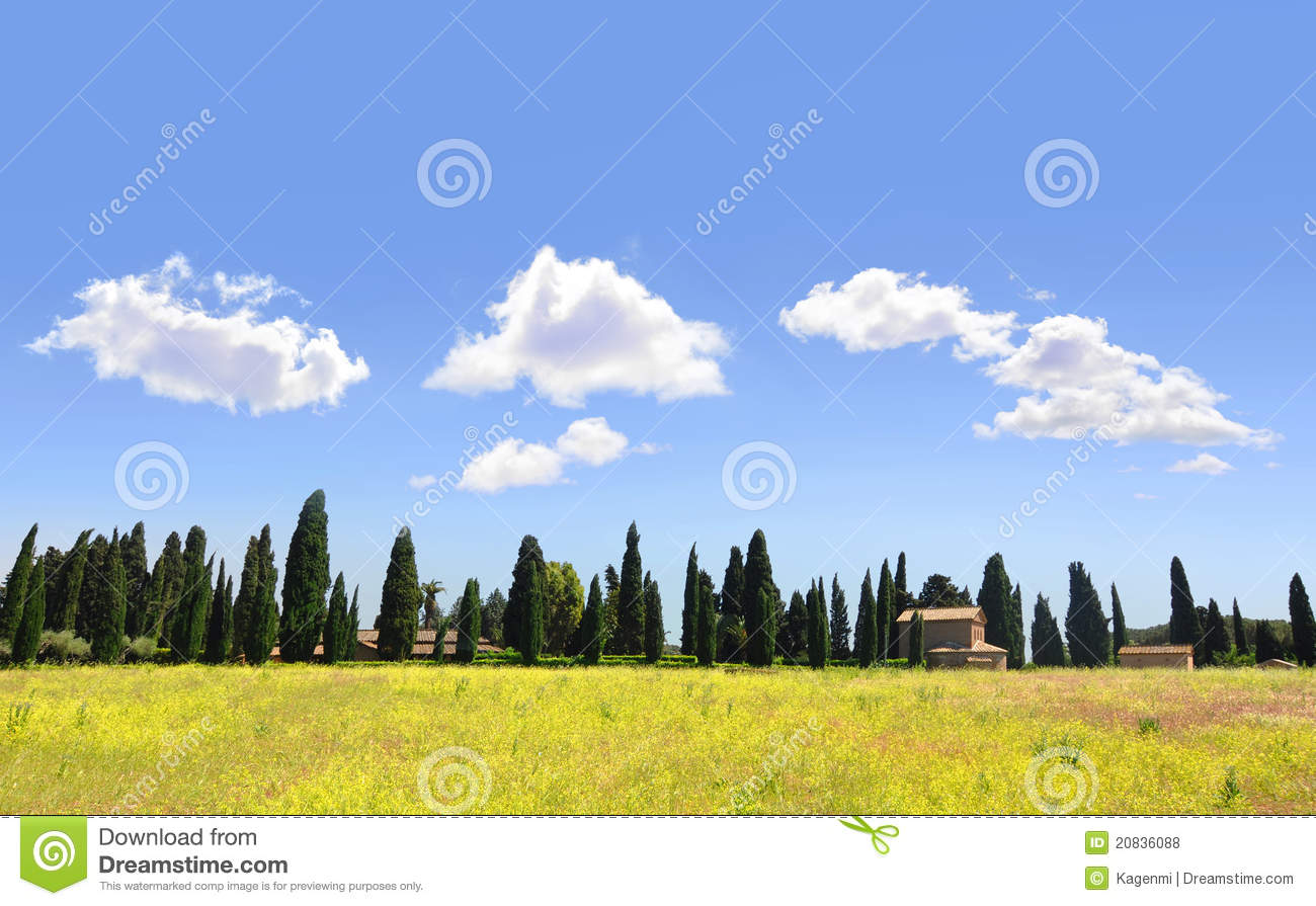 Tuscan landscape with yellow rapeseed and cypress