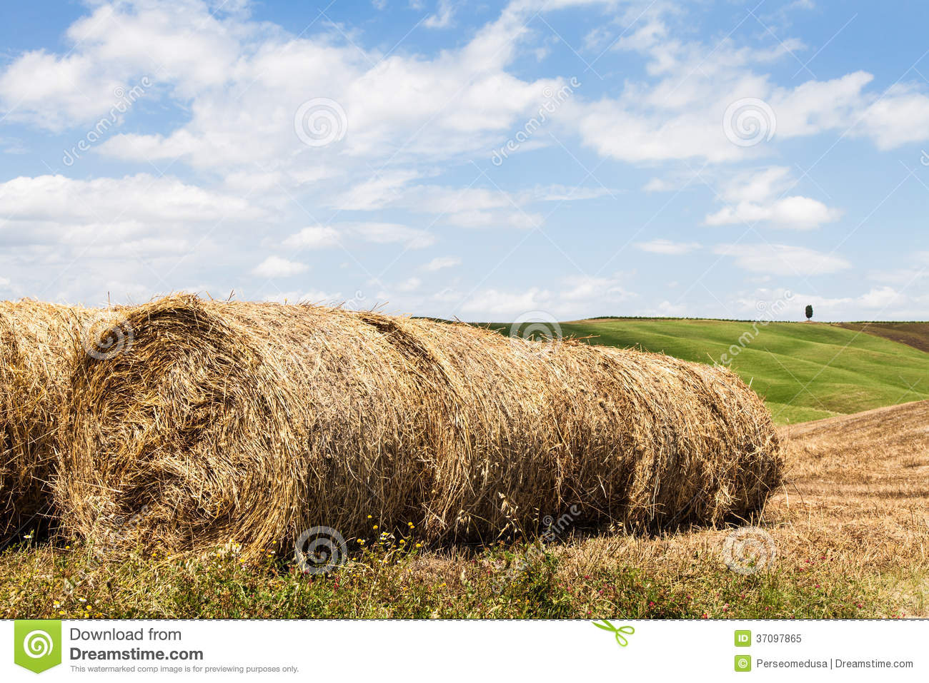 Tuscany Agriculture Royalty Free Stock Photo - Image: 37097865