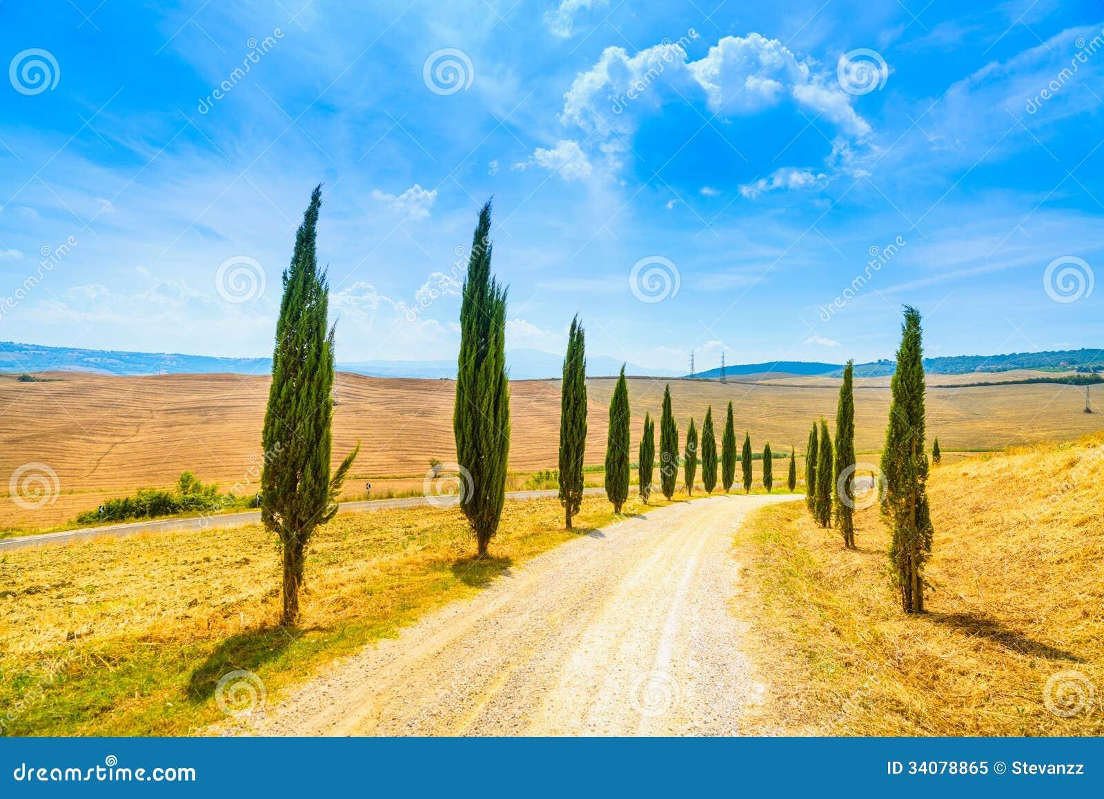 Tuscany, Cyprysowi drzewa biały drogowy wiejski krajobraz, Włochy, Europa