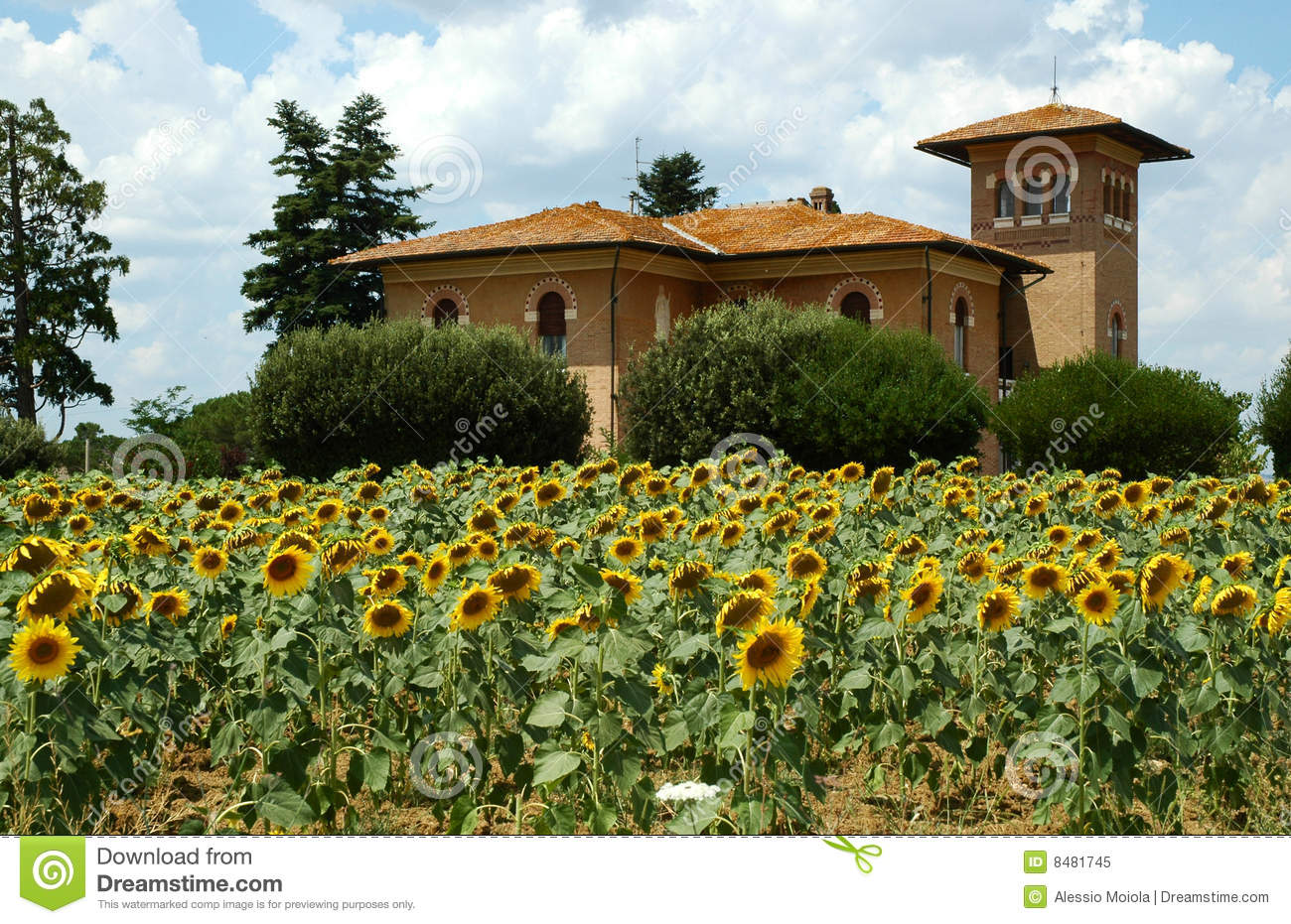 Royalty Free Stock Photo Tuscany Farm Sunflowers Image8481745 also Small Country Cottage House Plans Small Country Cottage Small C13a71da7e7207ef furthermore Country Harvest Table together with Farm Fence Every Journey Starts With A Path Mike Savad in addition Citrus Zen Garden 1487627. on country farmhouse plans
