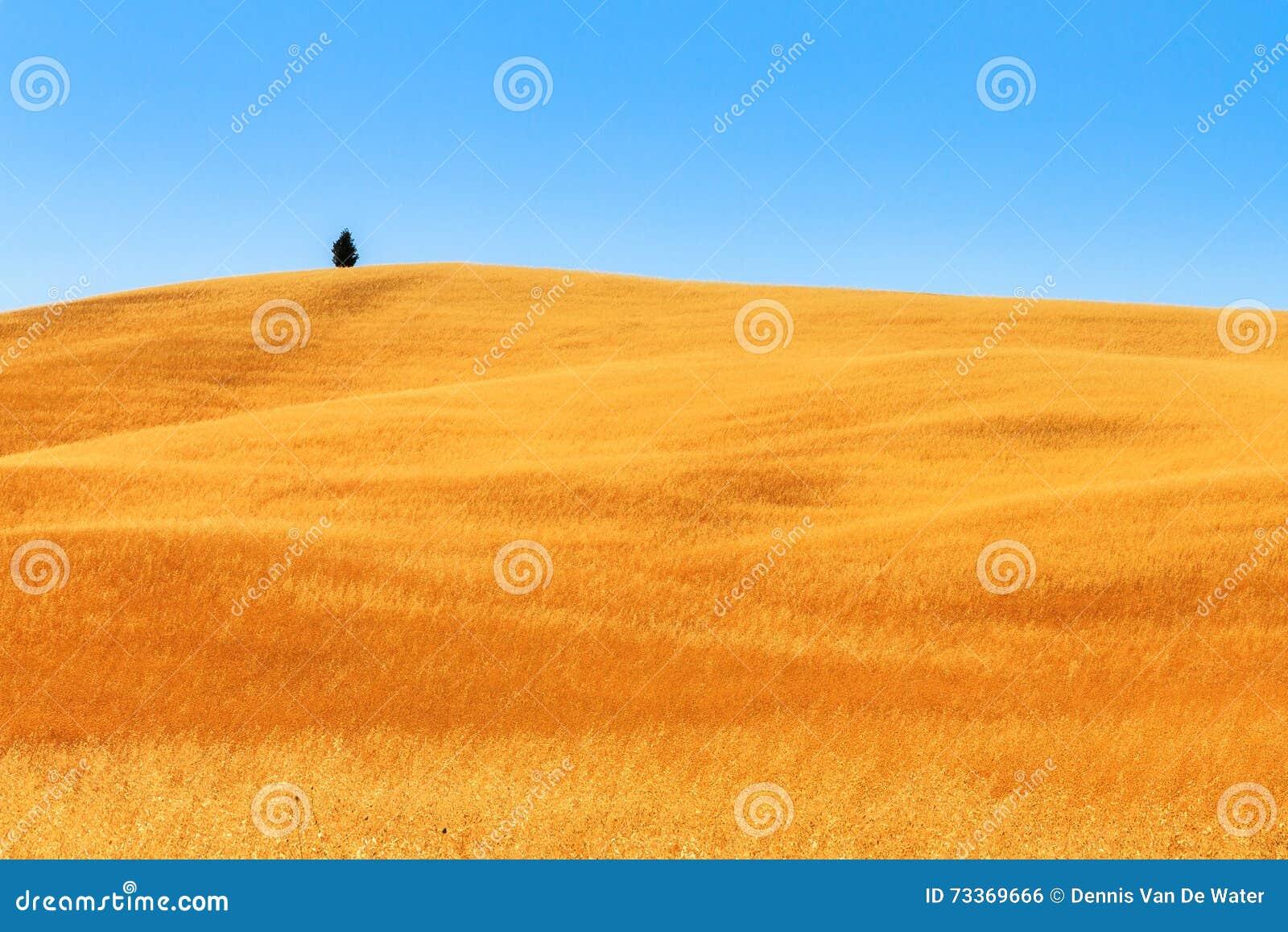 beautiful yellow field landscape - photo #38