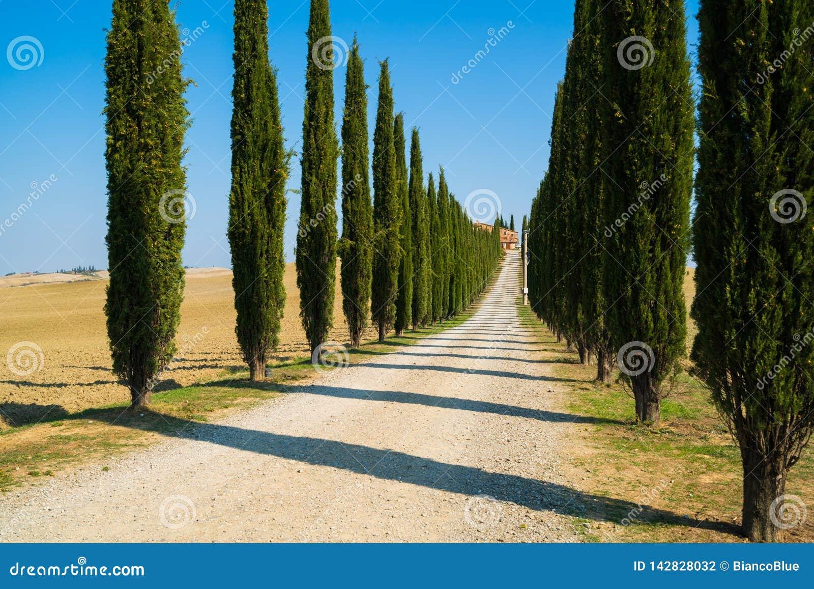 Tuscany krajobraz cyprysowi drzewa drogowi w Włochy