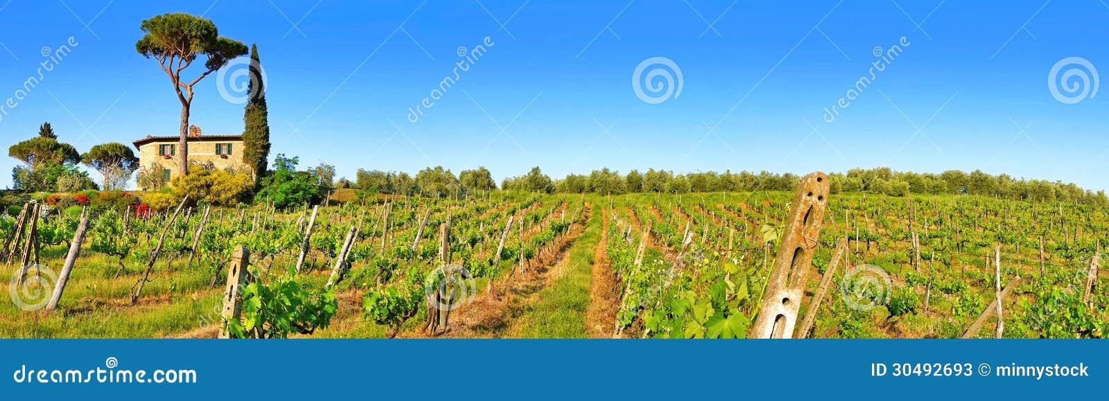 Tuscany landscape panorama with vineyard at sunset, Chianti region, Italy