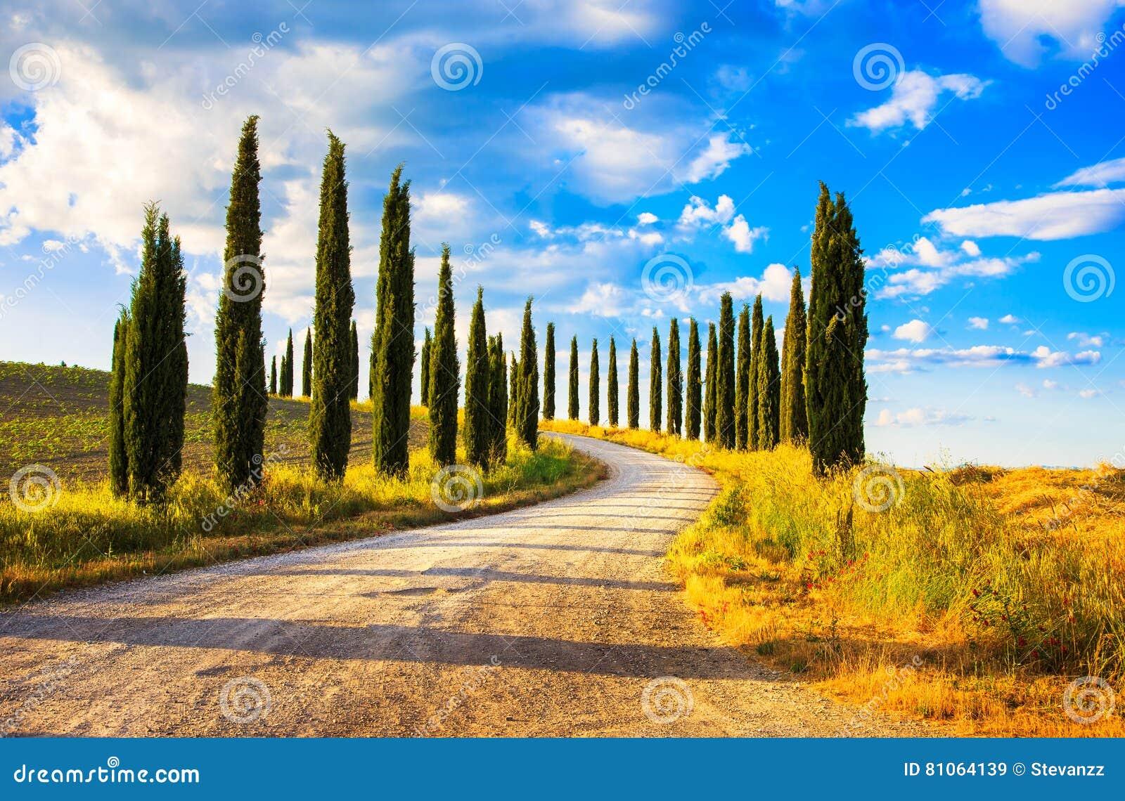 Tuscany landskap för vit väg för cypressträd lantligt, Italien, Europa