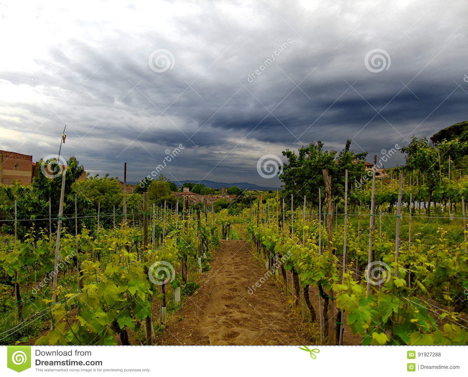 Tuscany vingård
