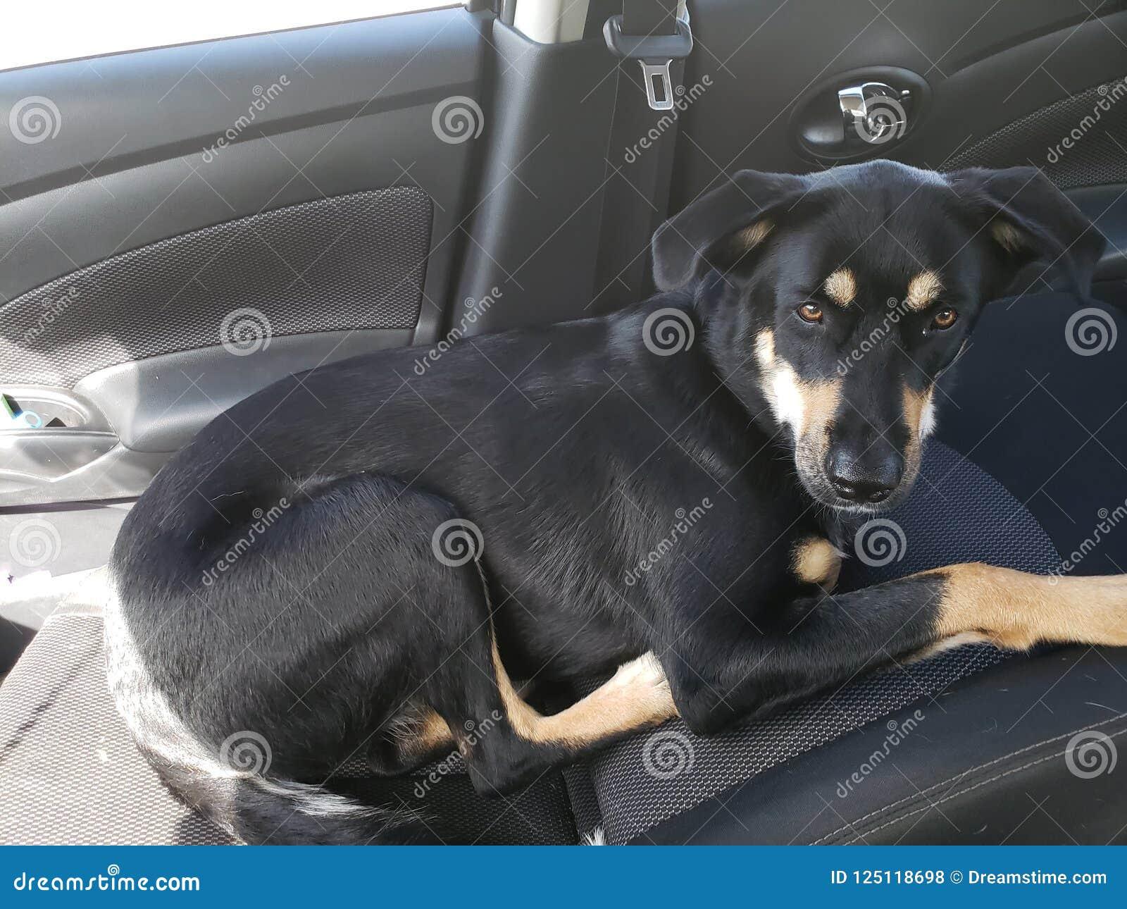 TUSENSKÖNA i komforten av körning tillbaka