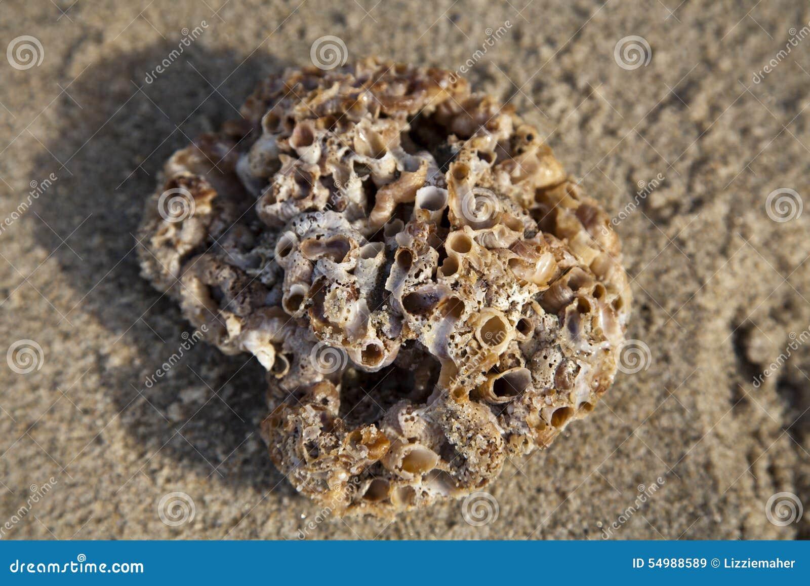 Tvättat upp korall