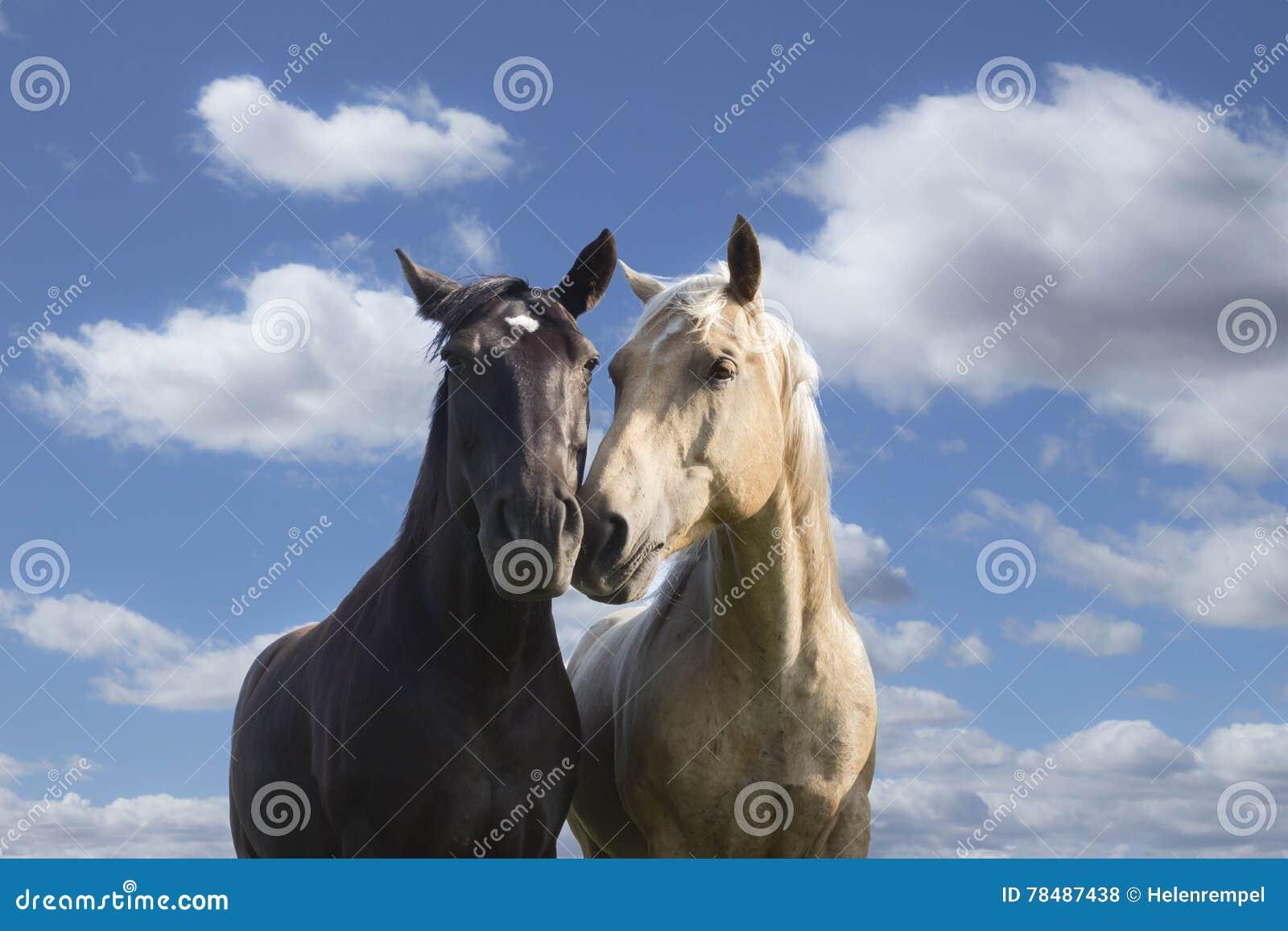 Två hästar som nuzzling mot en blå himmel med vita moln