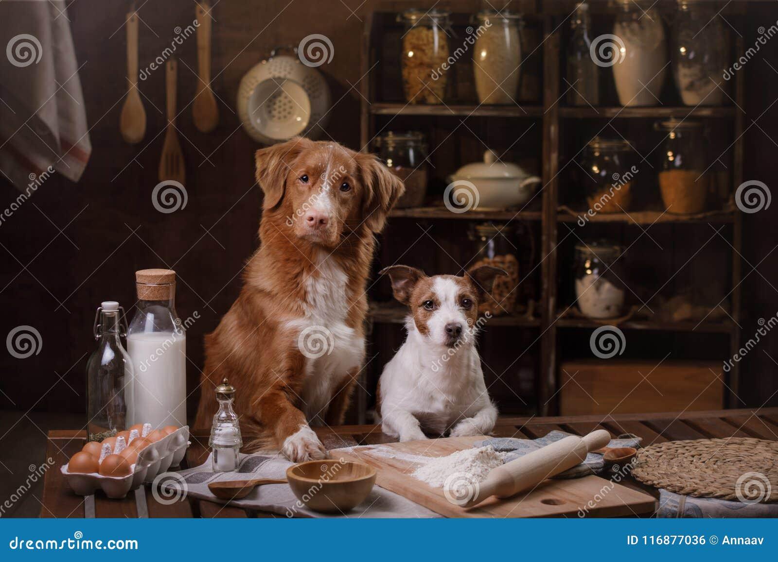 Två hundkapplöpning lagar mat i köket Älsklings- hemmastatt