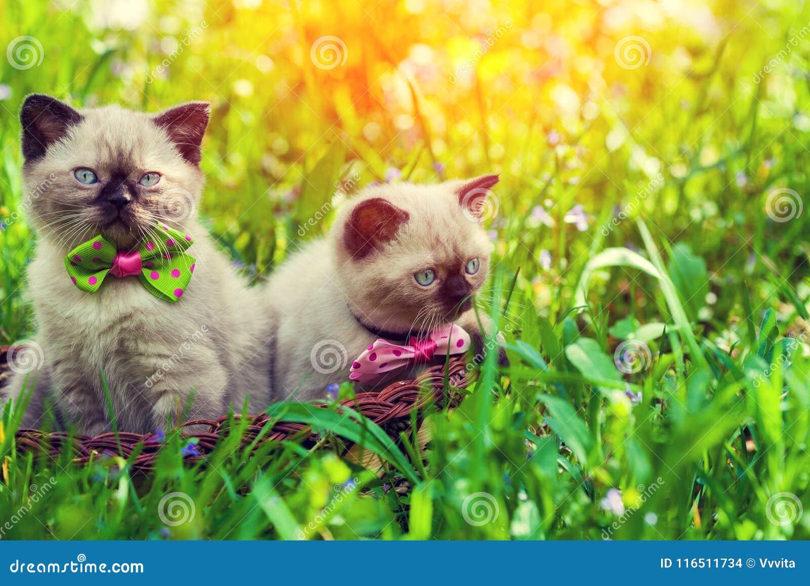 Två kattungar i en korg på en grön gräsmatta på soluppgång