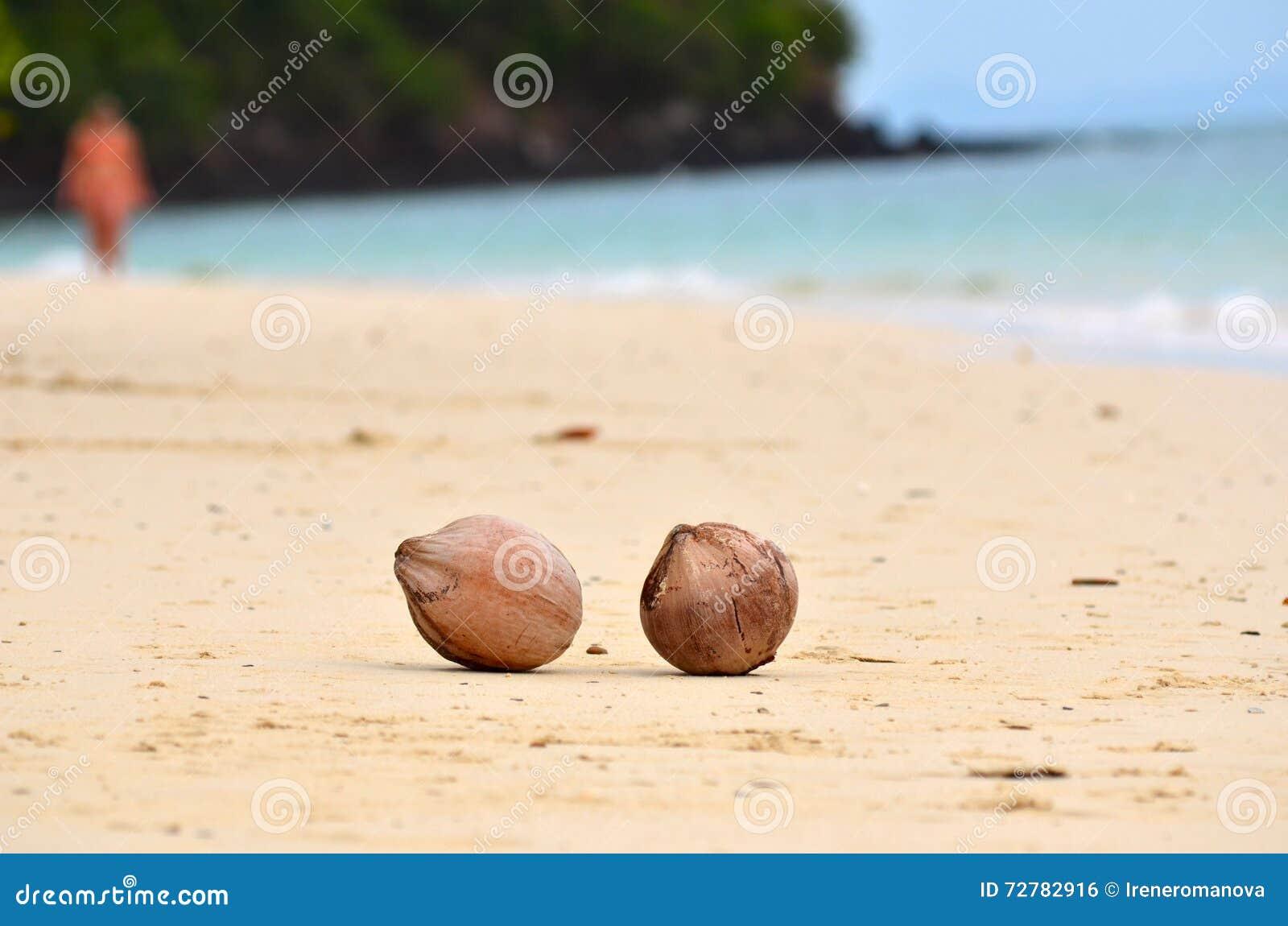 Två kokosnötter på den sandiga havskusten