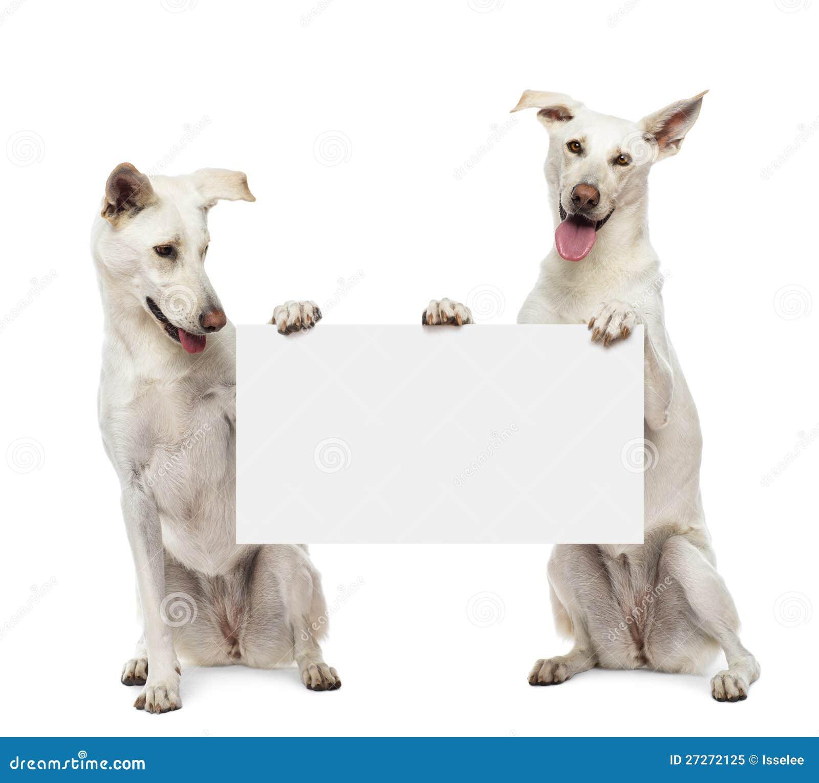 Två korsninghundar som sitter och rymmer