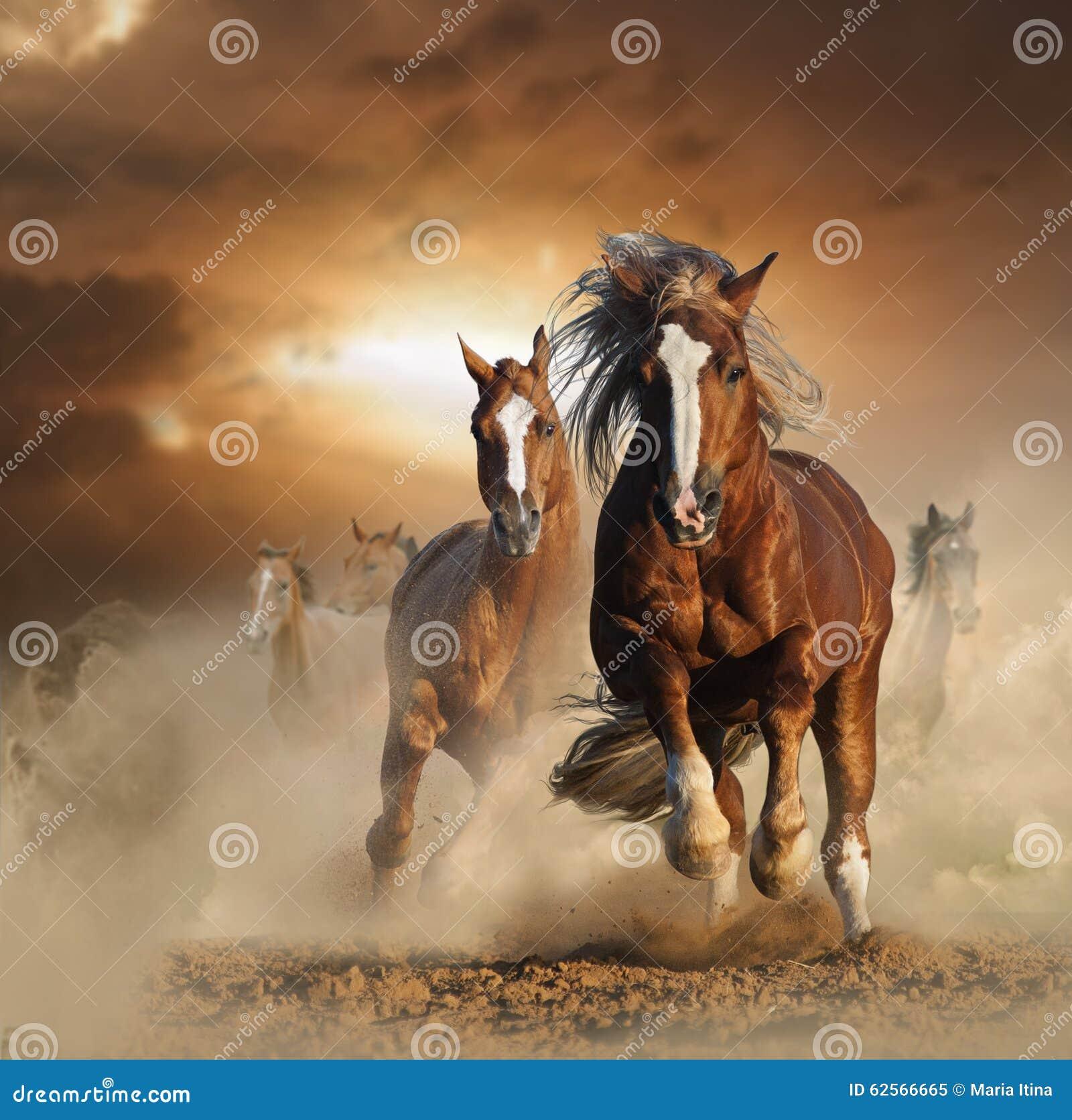 Två lösa kastanjebruna hästar som tillsammans kör i damm