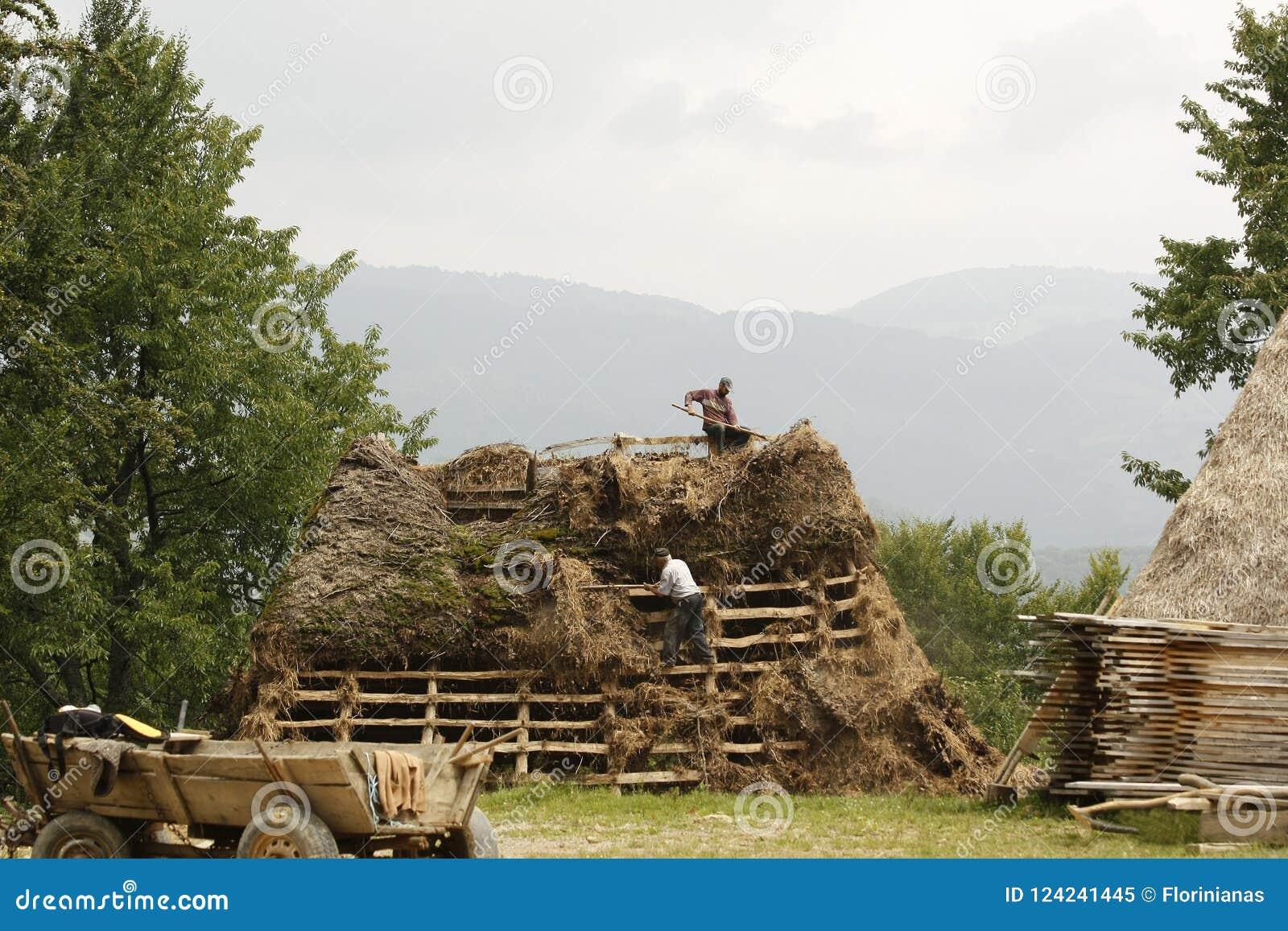 Två landsmän som arbetar på en trätakbeläggning det med hö