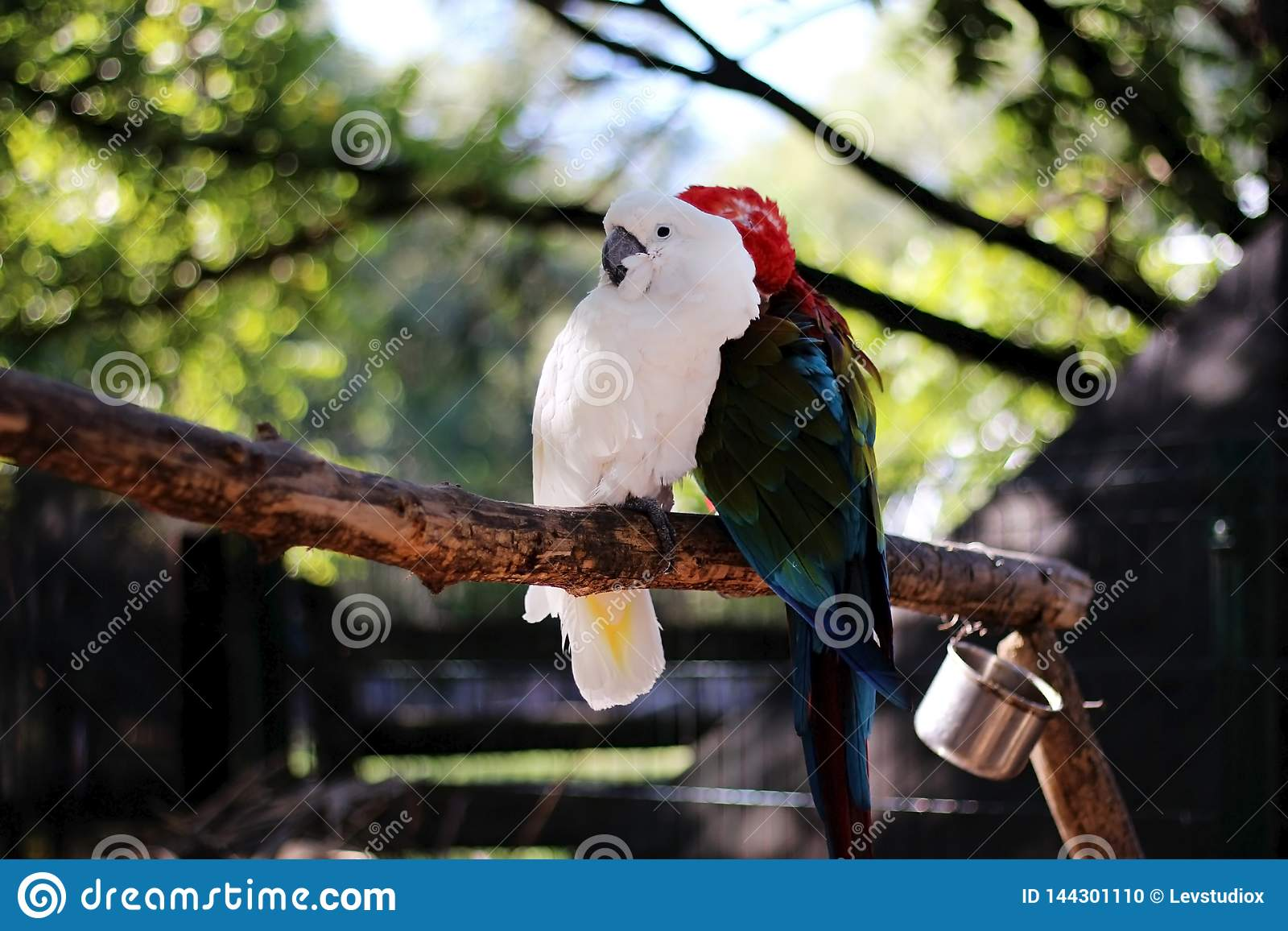 Två papegojor sitter på en filial i zoo