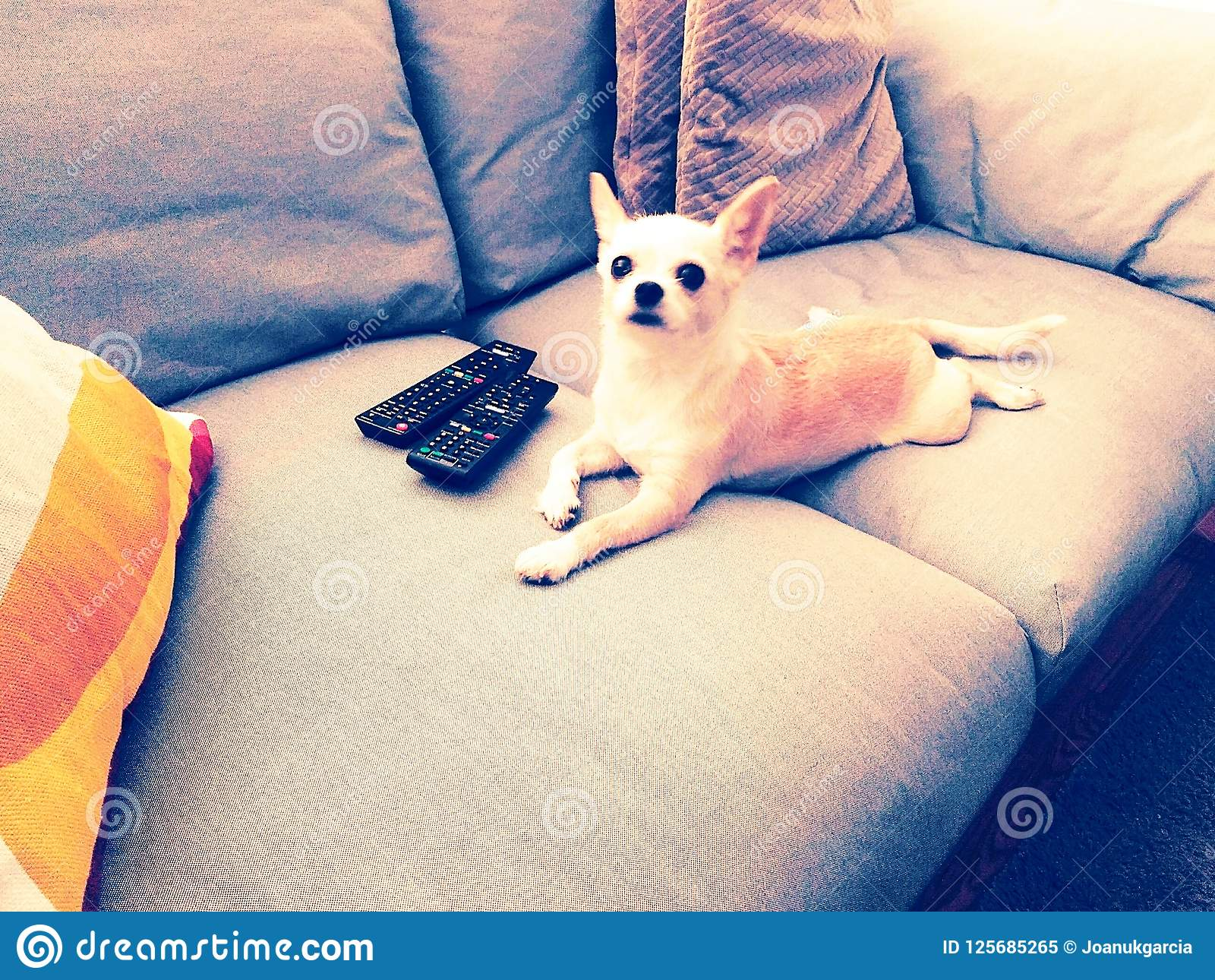 TV σκυλιών, σκυλί που βρίσκεται στον καναπέ με τους ελέγχους TV