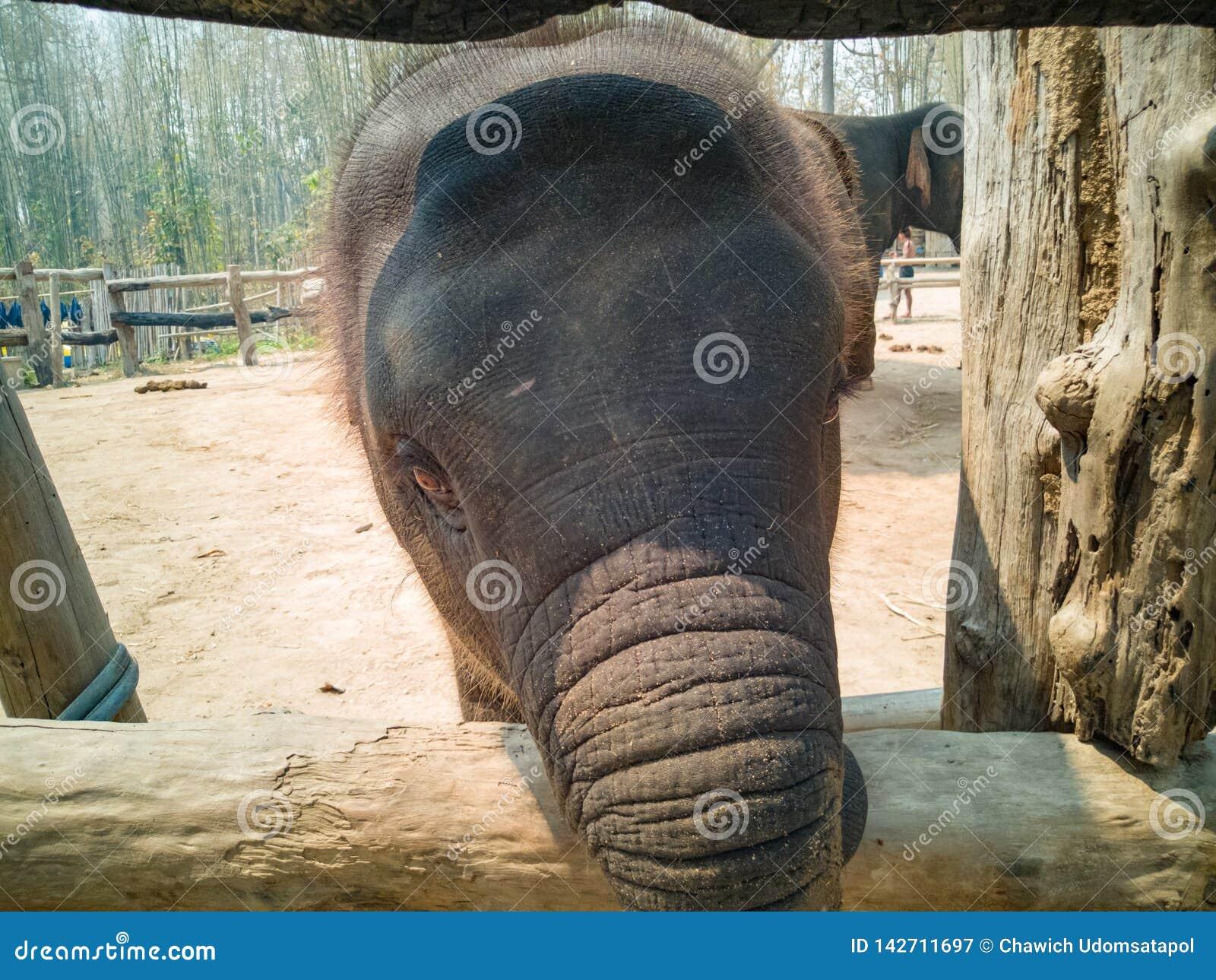 Twarz cutie dziecka słoń