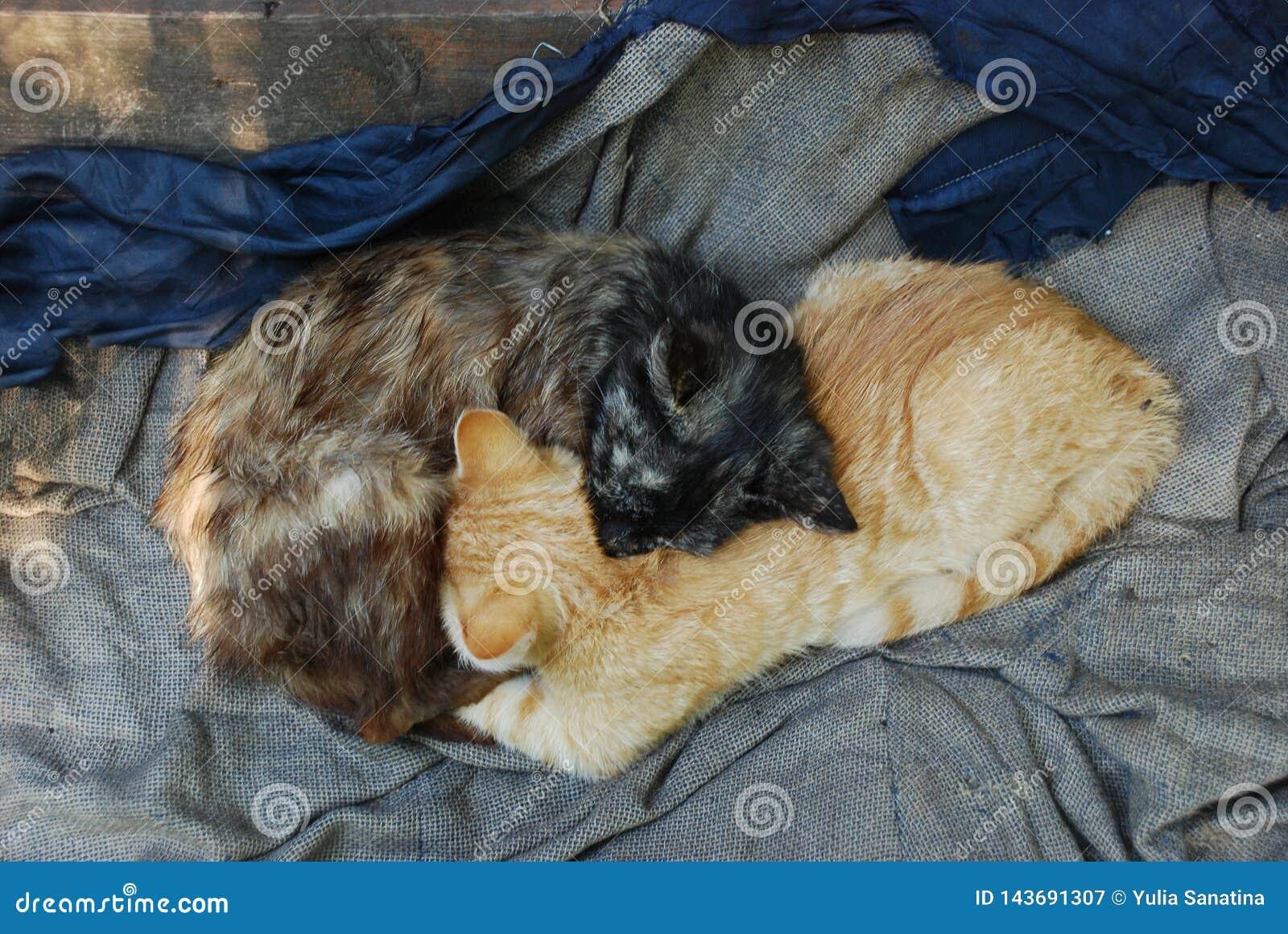 Twee dakloze katjesgember en donkere bruine slaap als teken van Ying yang
