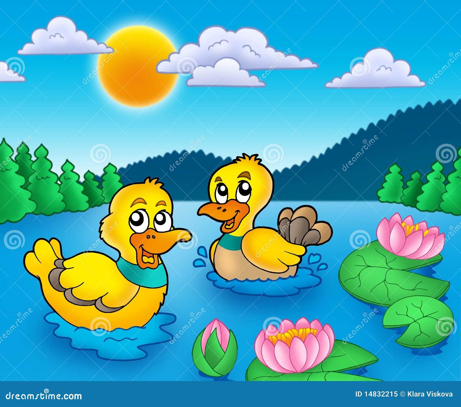 Twee eenden en water lillies
