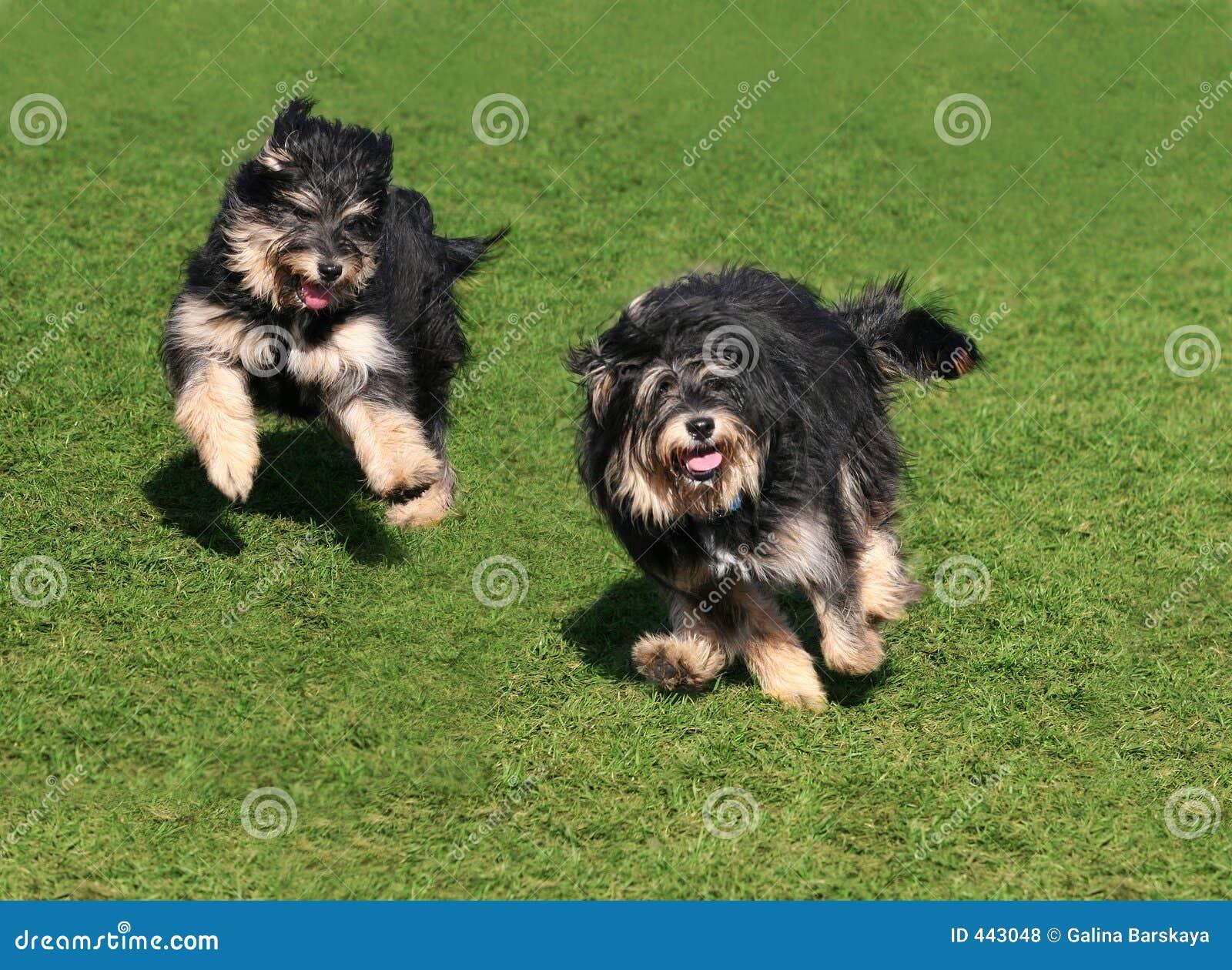 Twee gelukkige honden